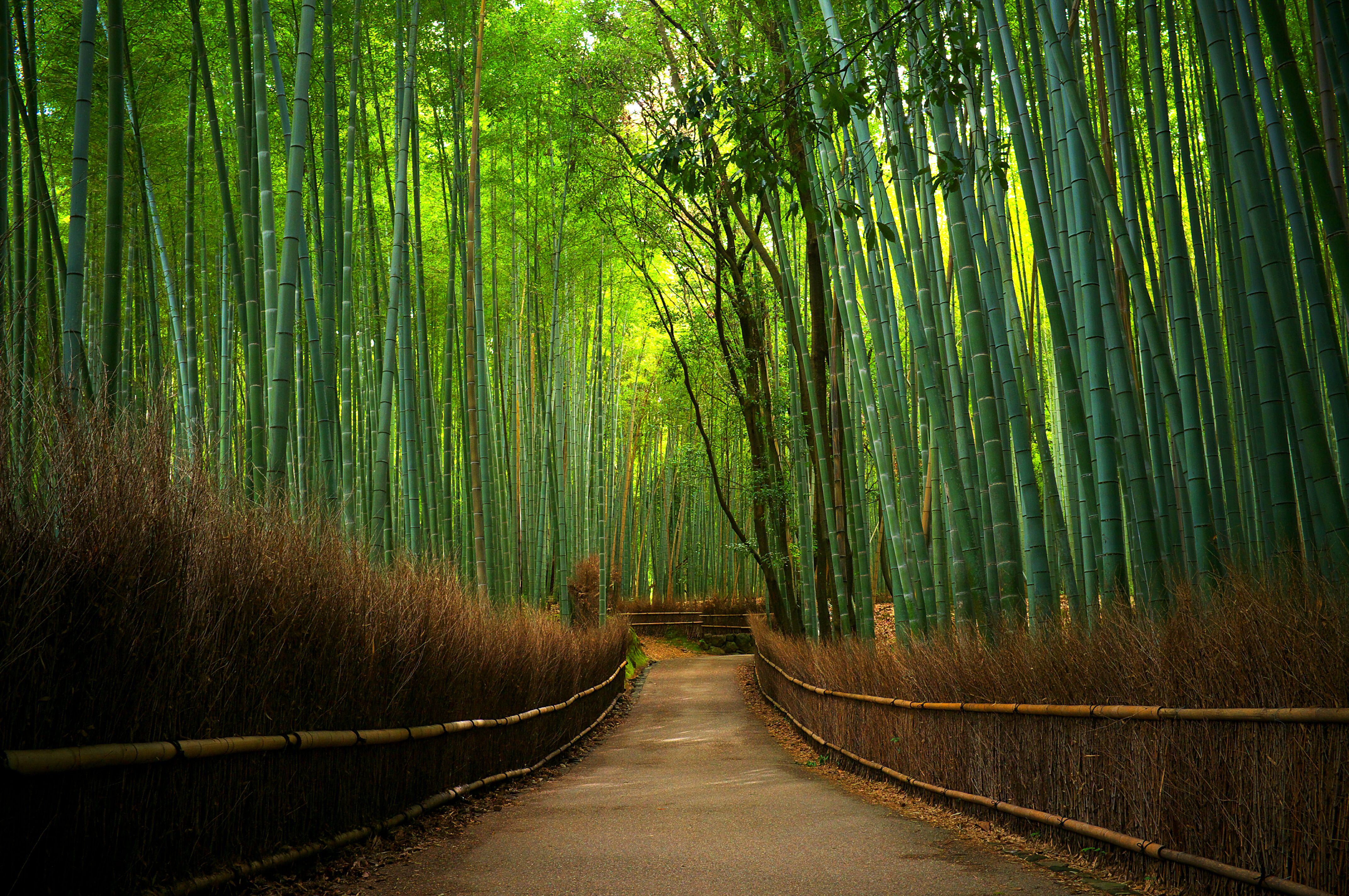 4288x2848px bamboo forest wallpaper for home - wallpapersafari