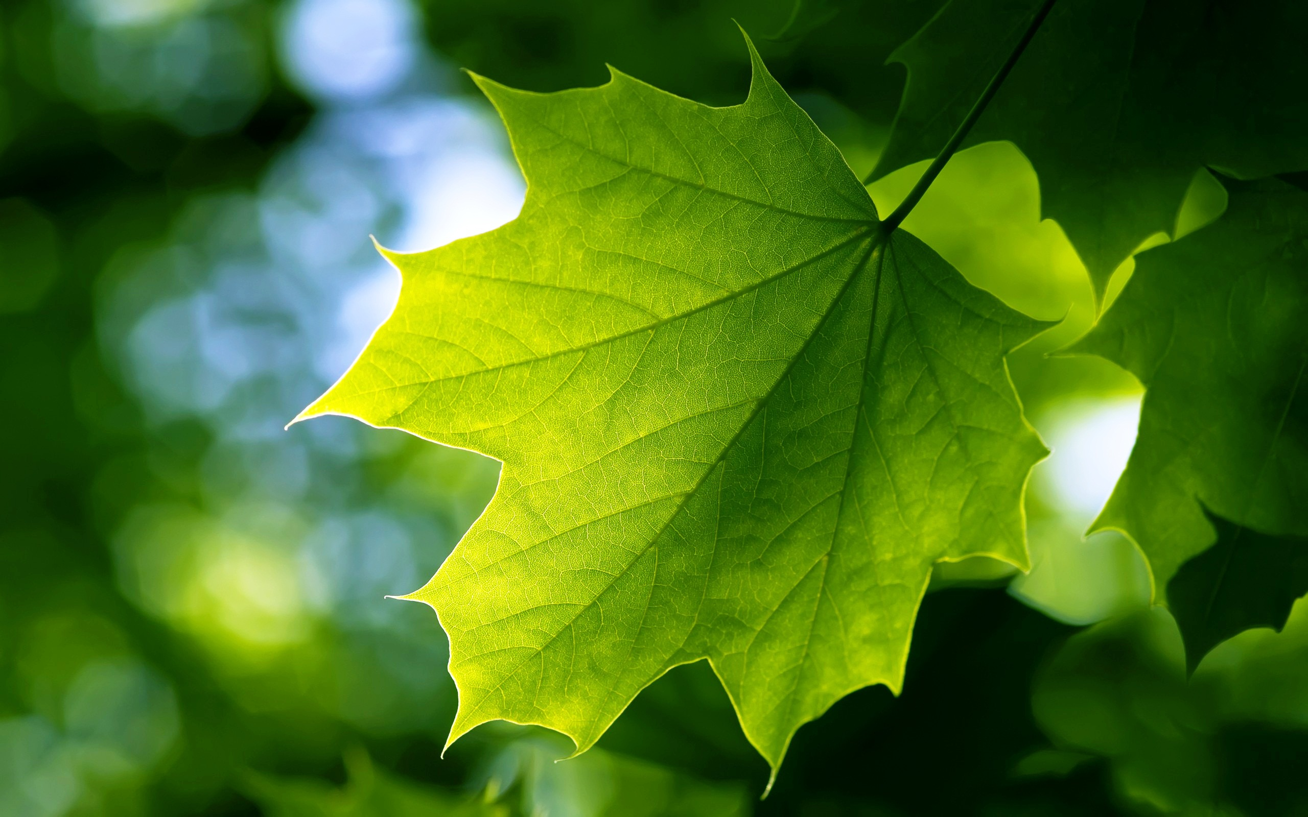 43 Green Leaf Wallpaper Hd On Wallpapersafari