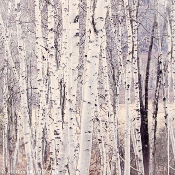 removable wallpaper silver forest wallpaper logo paypal mist wallpaper 570x570