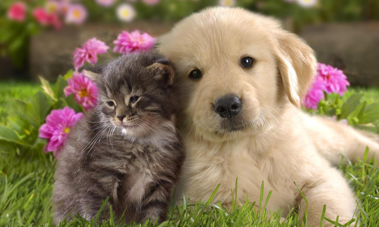 HD Wallpapers schattige wezens svetlenky pup kitten polosatenky 1280x768