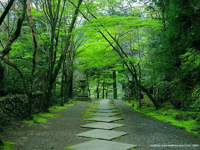 Japanese Zen Garden Wallpaper Interior Design