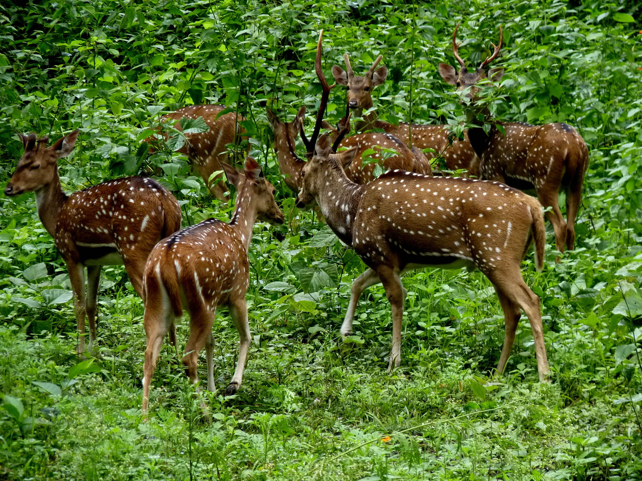 Herd of Deer in the Forest HD Wallpaper Background Image 2048x1536