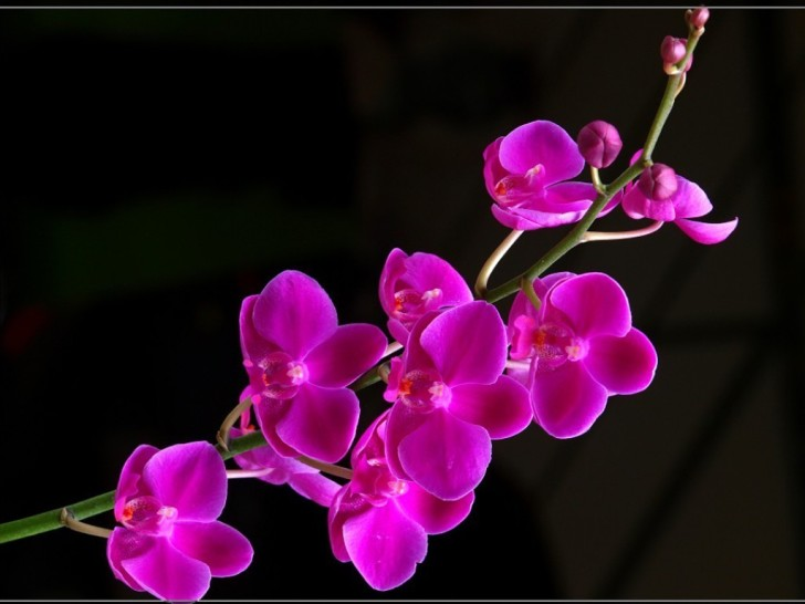 Beautiful Purple Orchid HD wallpapers   Beautiful Purple Orchid 728x546