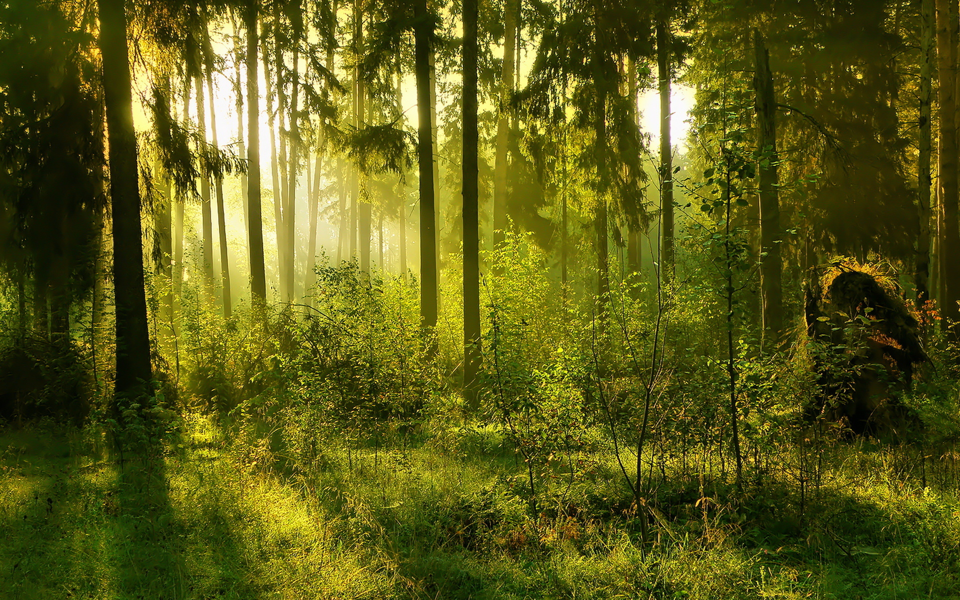 Free Desktop Wallpapers Nature Green