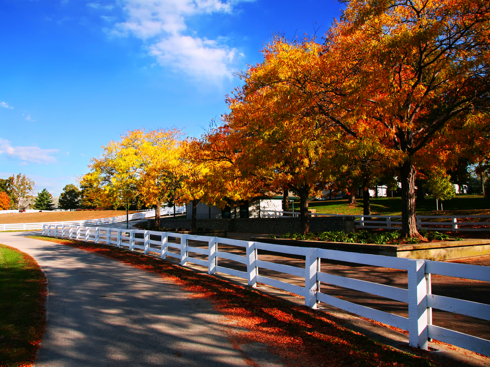 Horse Farm Autumn wallpaper This Years Election is About Nothing 1600x1200