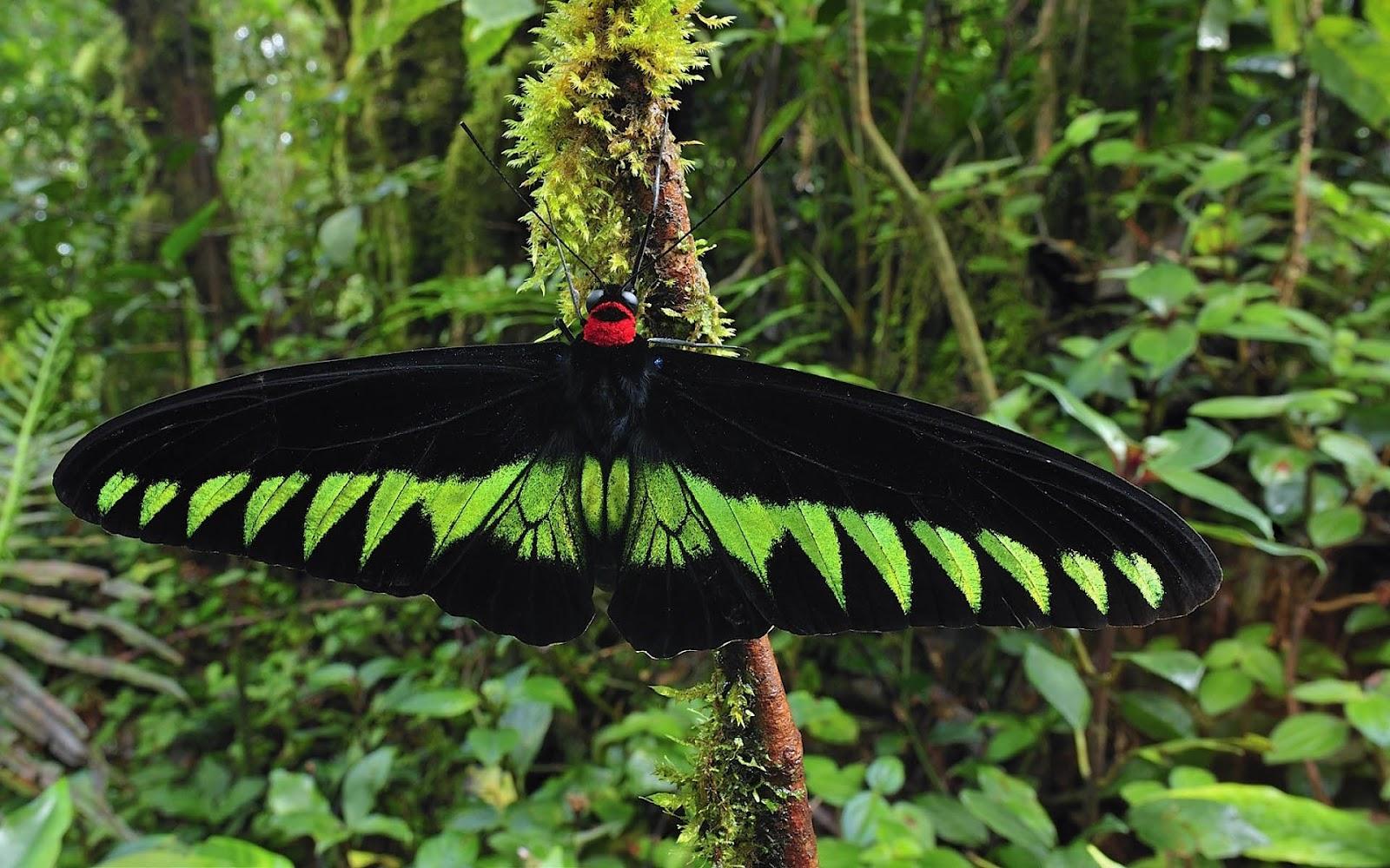 green butterfly sitting on a branch HD butterflies wallpapers 1600x1000