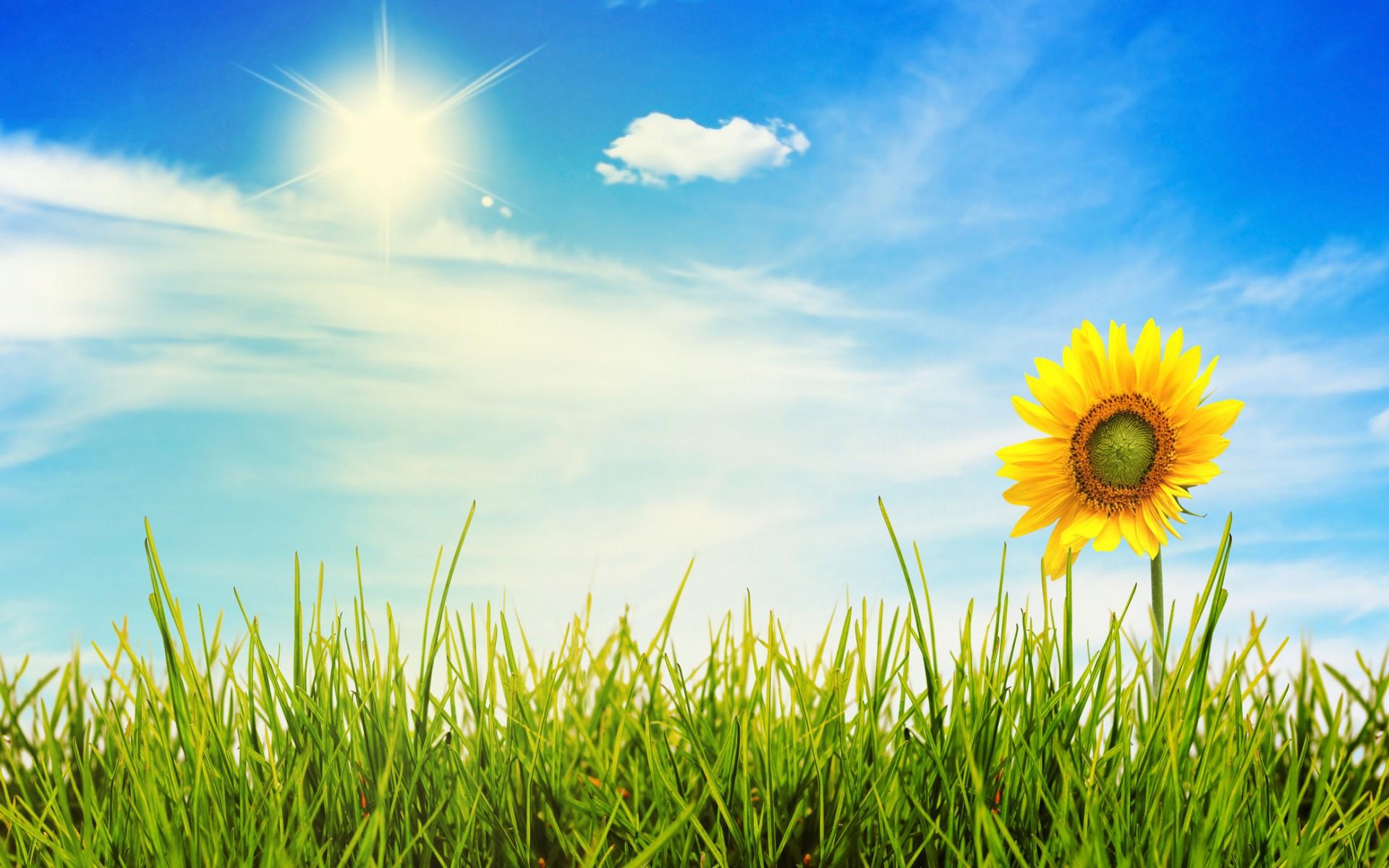 Sunny Day Wallpaper Desktop