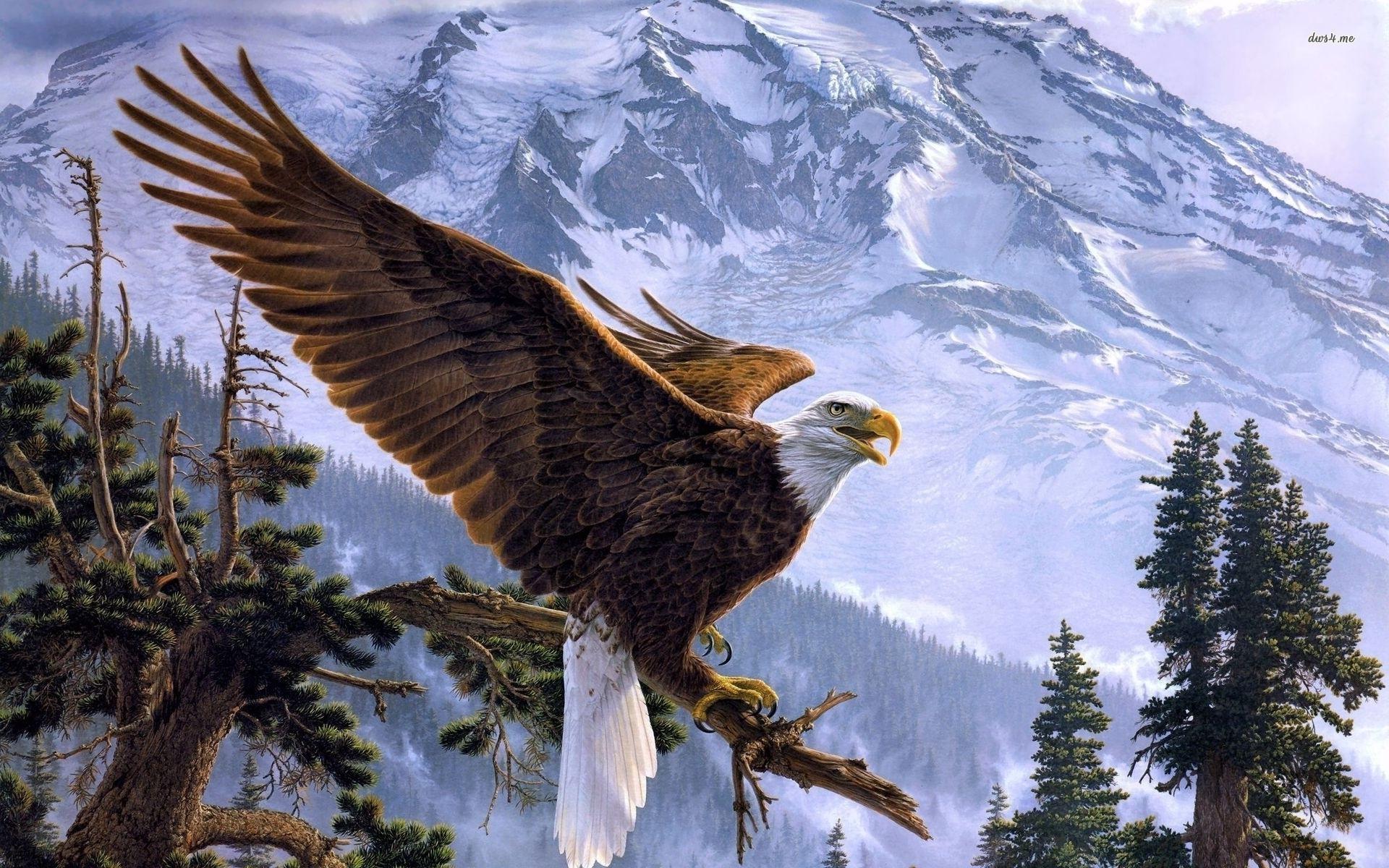 Bald Eagle Backgrounds Wallpapersafari