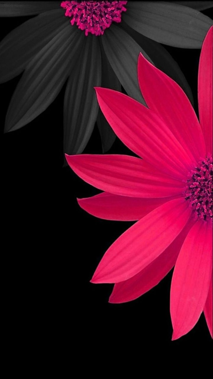 pink black flower wallpaper background Christimas 720x1280