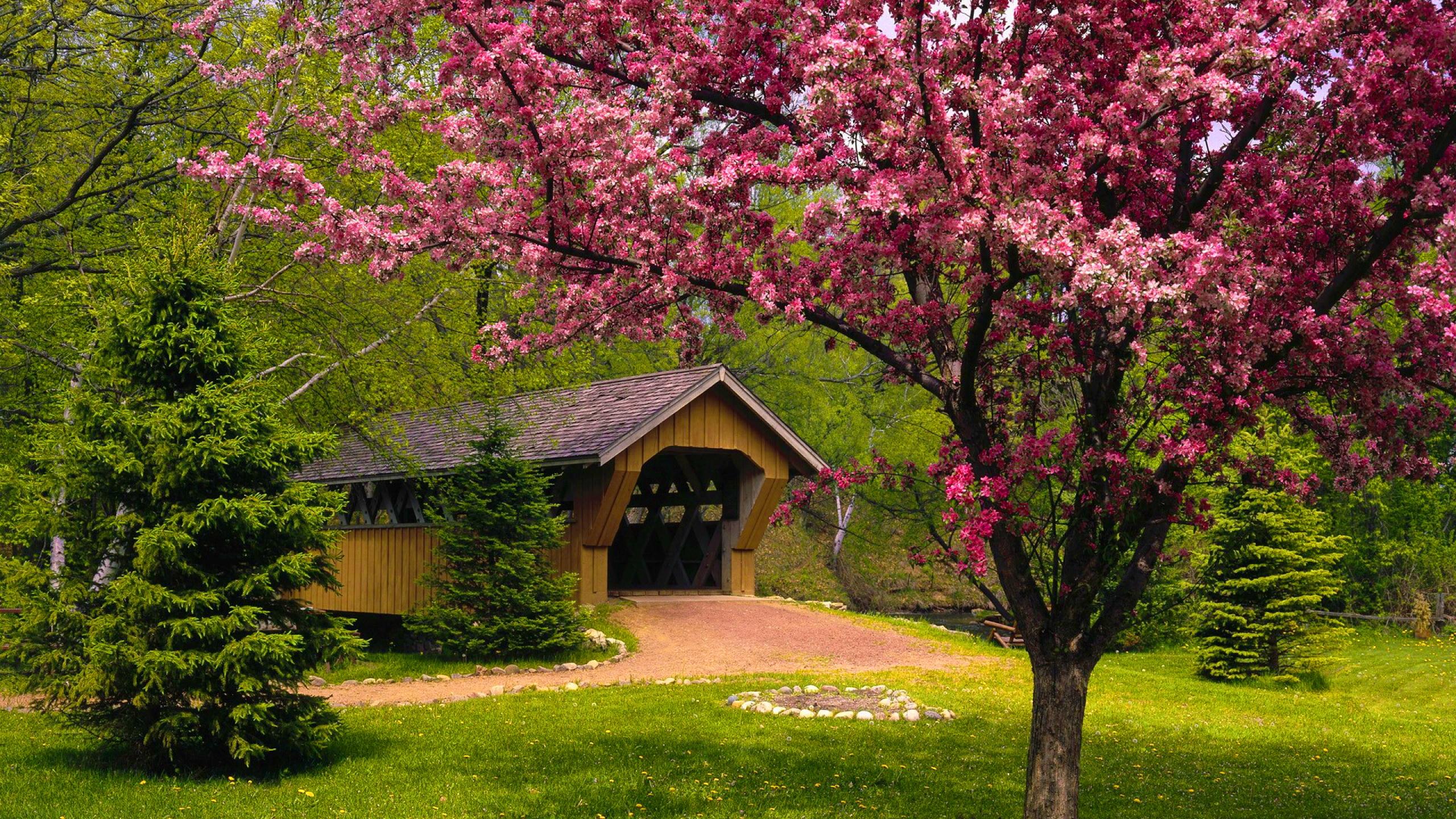 HD Wallpaper Spring season   httpwallpapermonkeycom 2560x1440