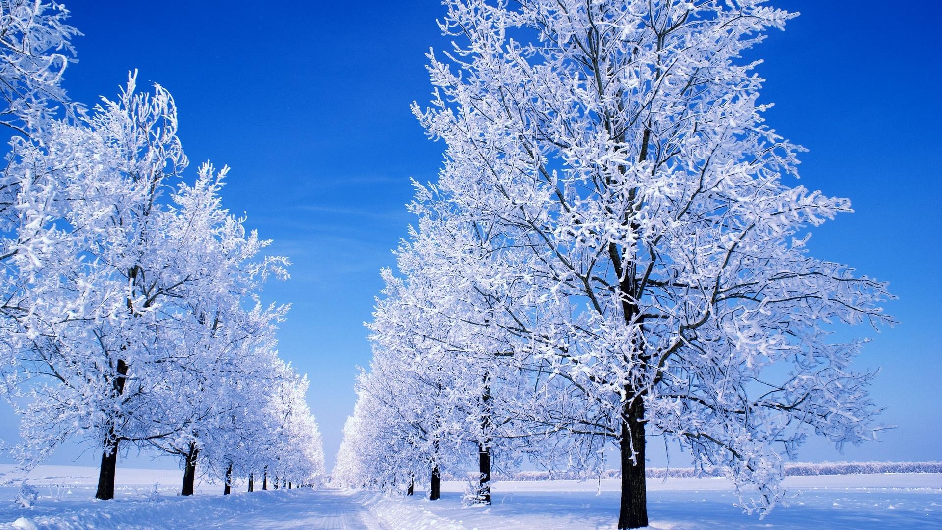 Winter Snow Scenes Desktop 1920x1080