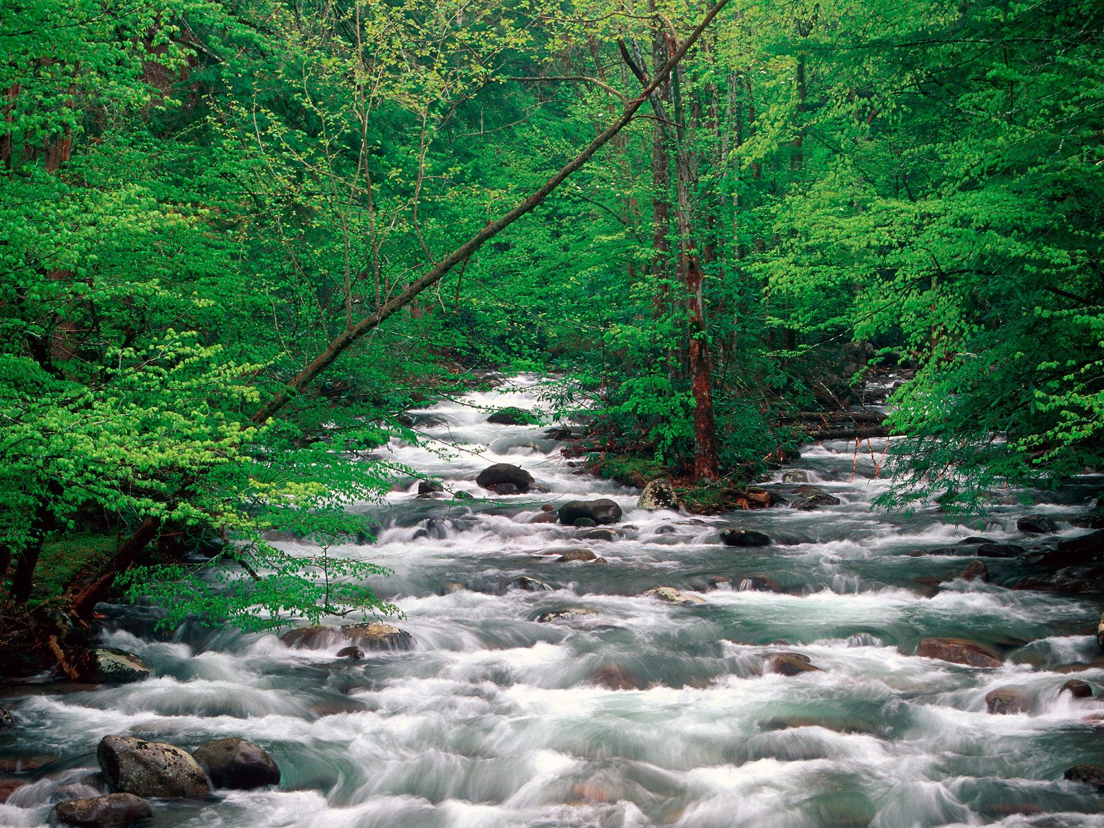 Little Pigeon River Great Smoky Mountains Tennessee Wallpaper 1600x1200