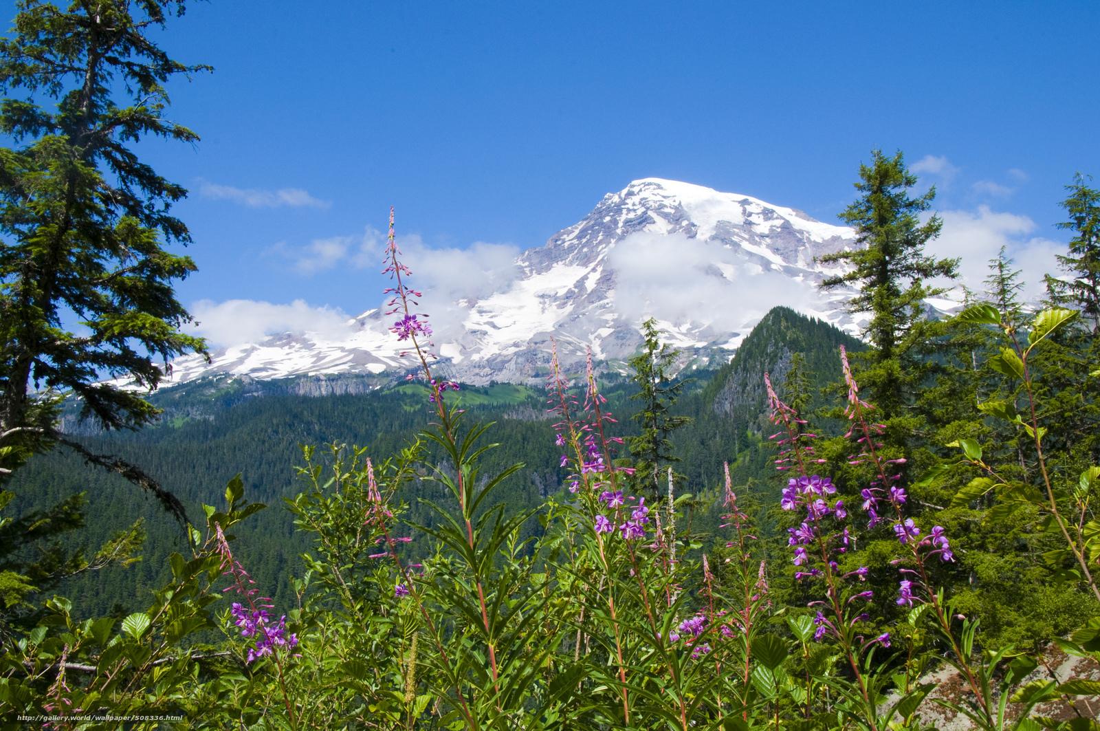 wallpaper mount rainier national park National Park Mount Rainier 1600x1063