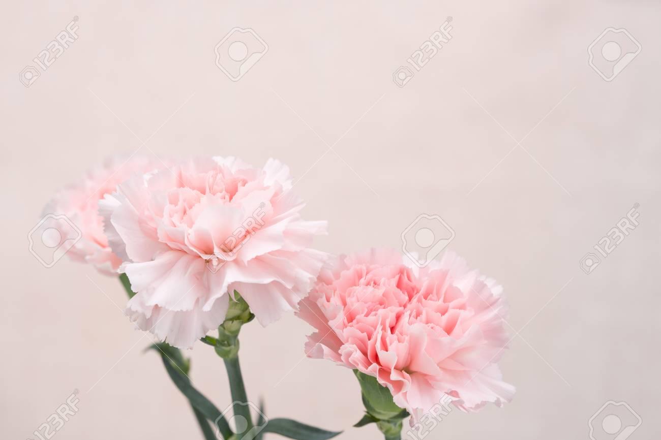 Flower Pattern Shot In Studiobackgroundwallpaper   Pink 1300x866