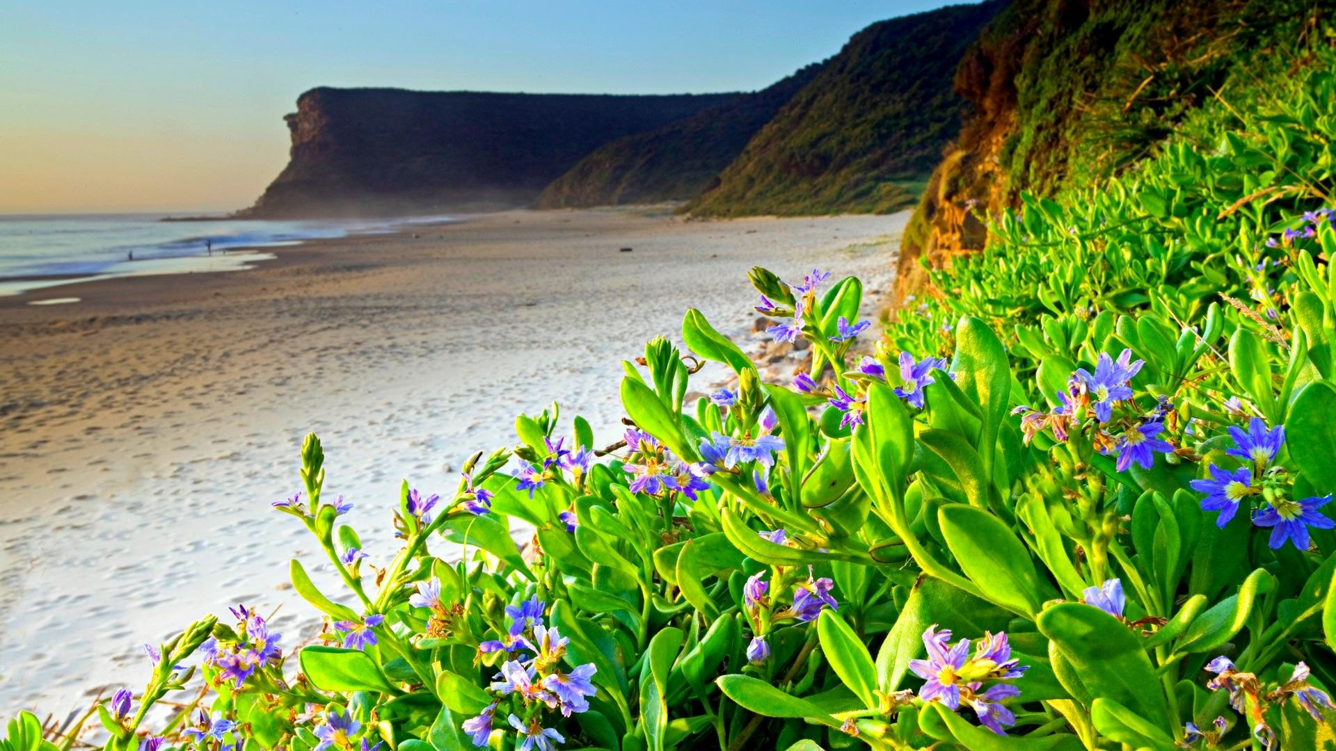 Coast Beach Spring Flowers Hd Wallpaper Wallpapers13com 1920x1080