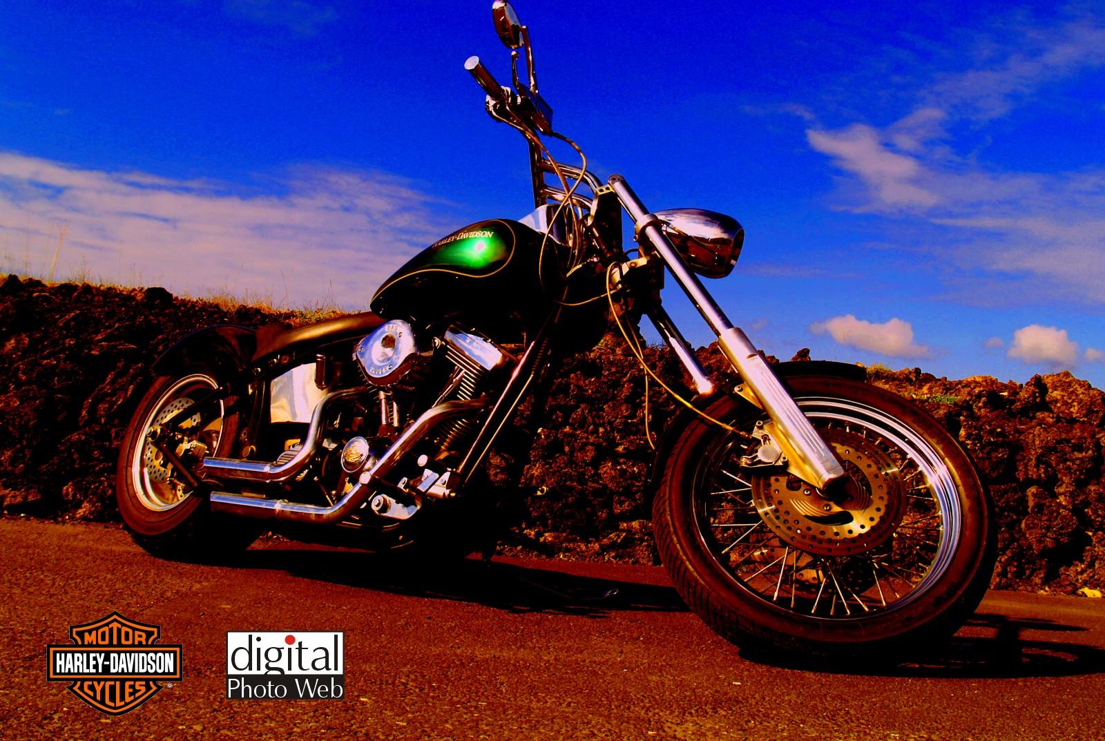 Harley Davidson Wallpaper Desktop 1600x1073