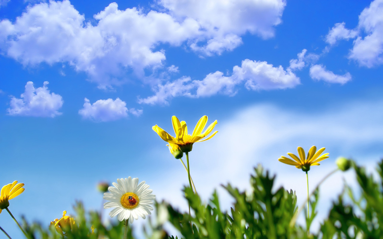Spring flowers wallpaper 2506 1280x800