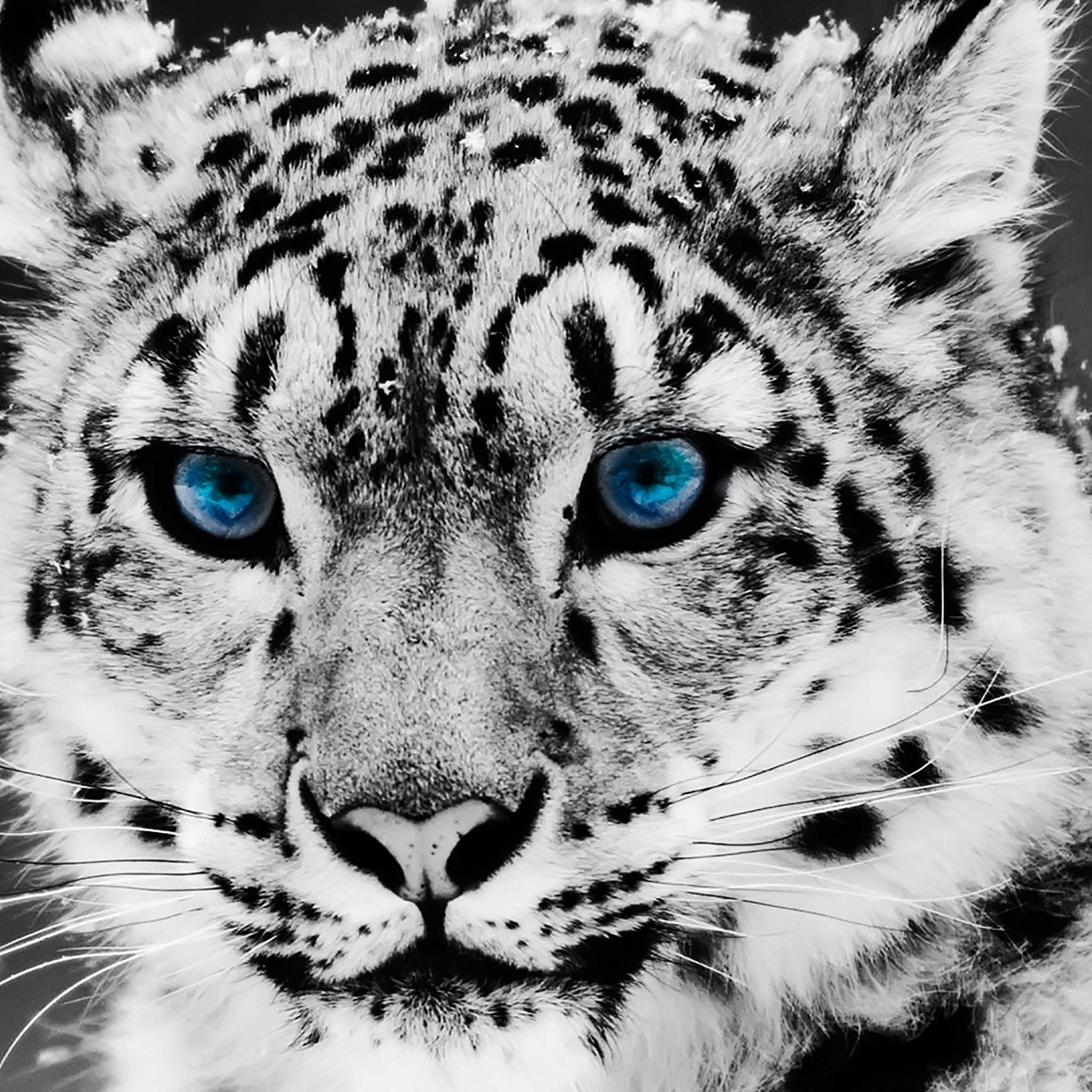 75 HD Animals iPad Backgrounds 2048x2048