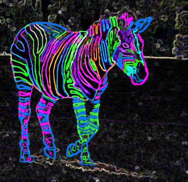 Go Back Pix For Bright Neon Zebra Wallpaper 612x592