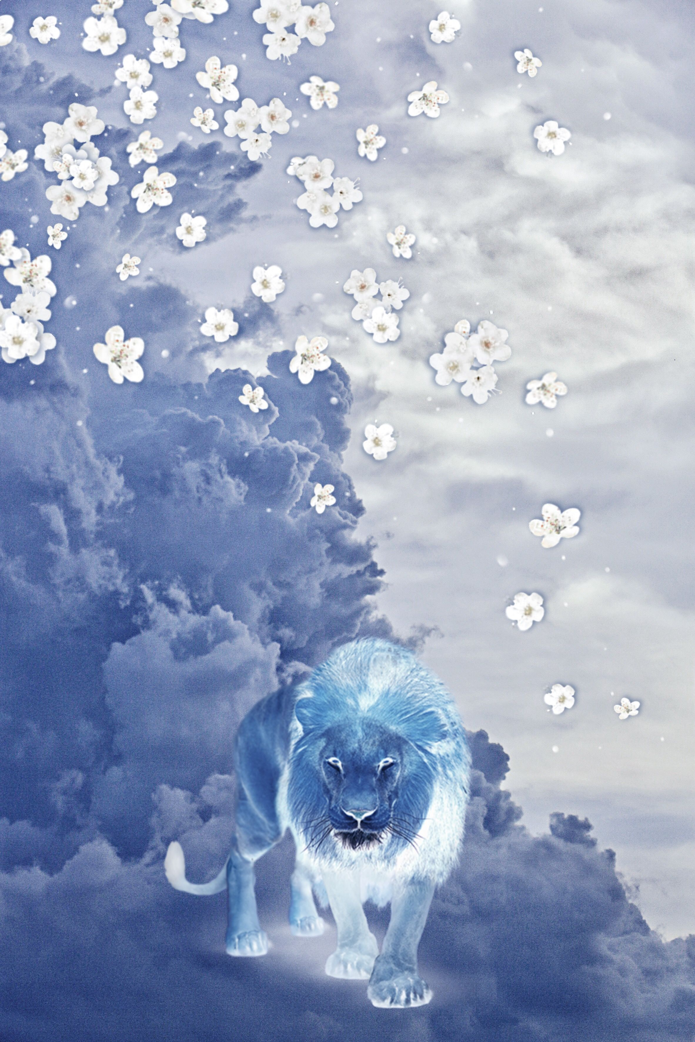 lion blue clouds background daisys original mine Glorified 2364x3546