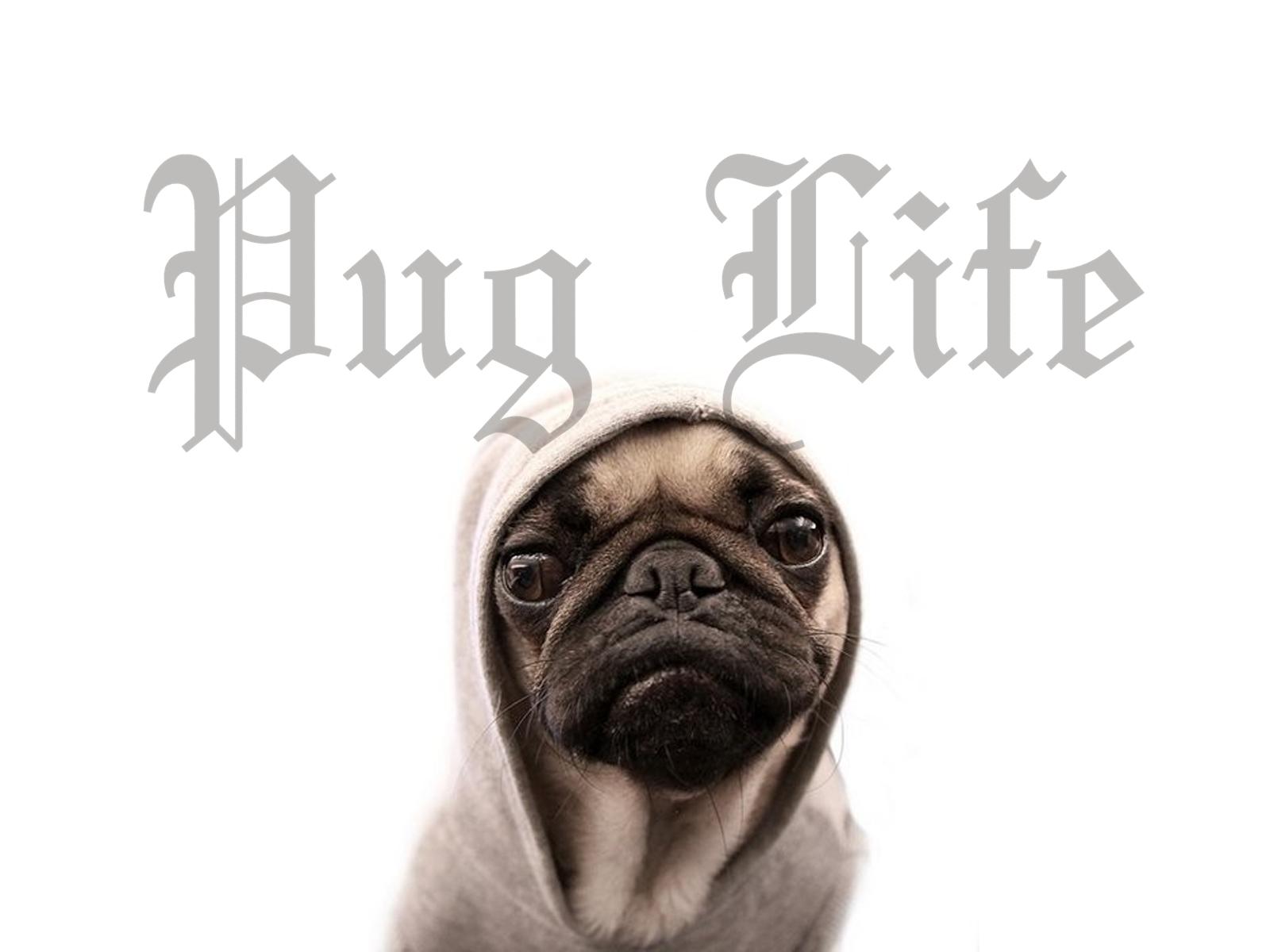 Funny Pug Wallpaper PicsWallpapercom 1600x1200