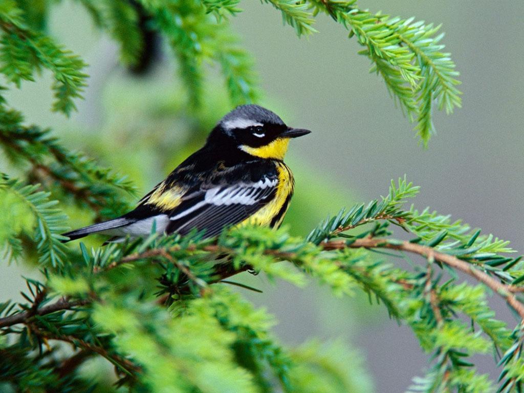 Birds Wallpapers Birds DesktopWallpapers Birds 1024x768
