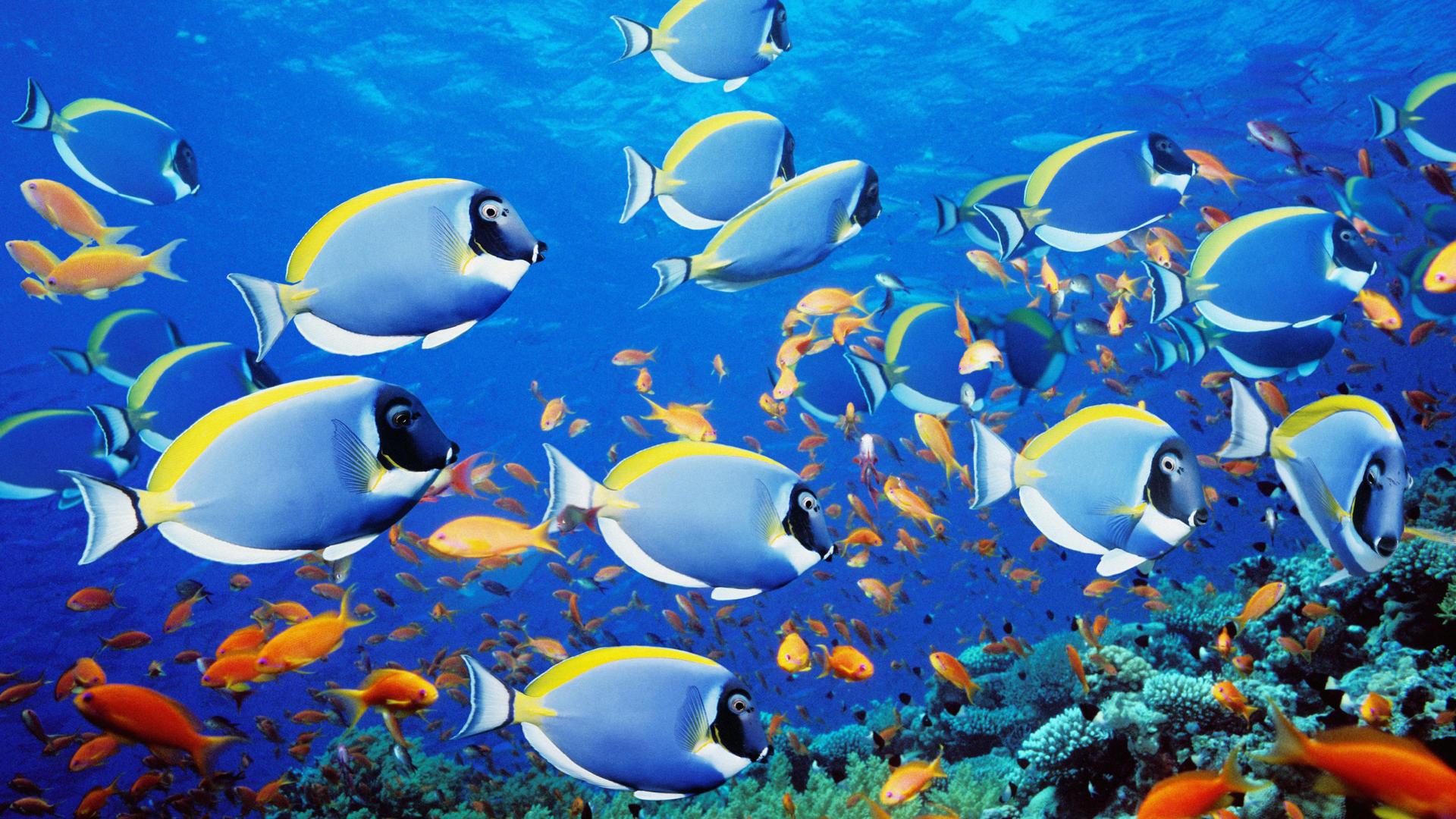 School of fish wallpaper wallpapersafari for Photos of fish