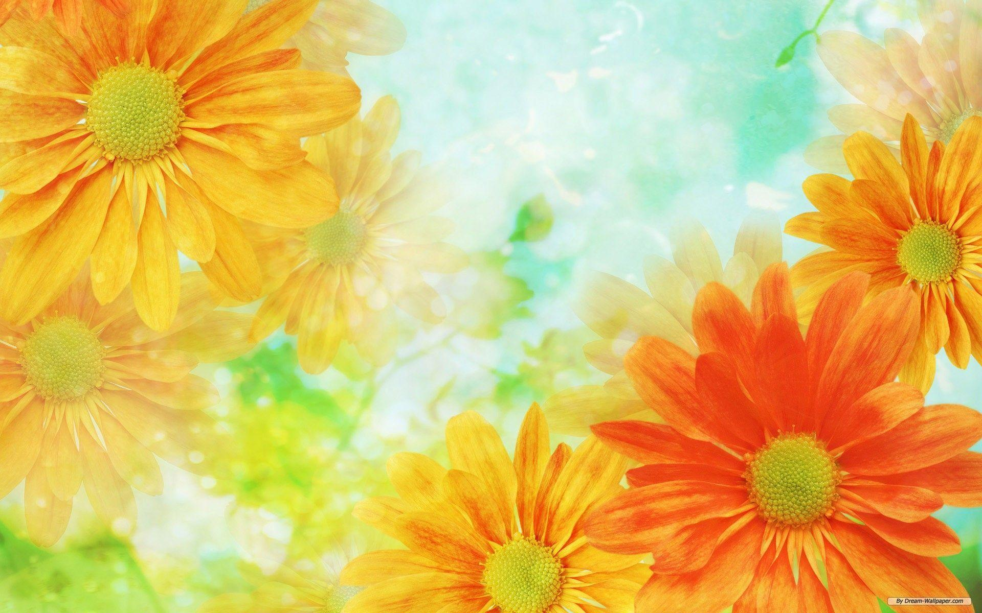 Flowers Backgrounds 1920x1200