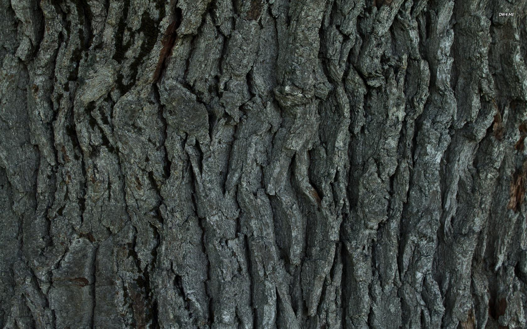 Tree bark wallpaper 1920x1080 Tree bark wallpaper 1920x1200 Tree bark 1680x1050