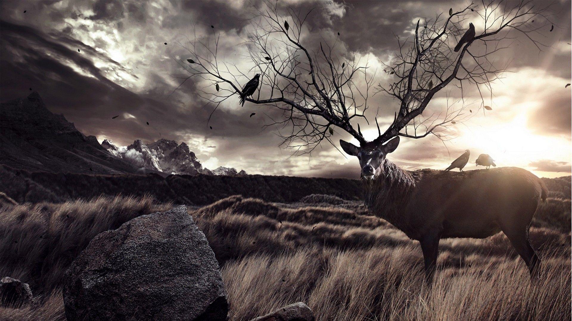 deer hunting wallpaper HD 1920x1080