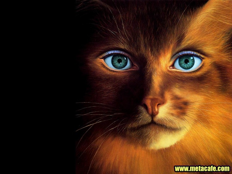 HD Animal Wallpapers Cool Wallpapers 800x600
