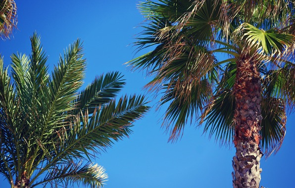 Wallpaper palm trees leaves trees sky wallpapers nature   download 596x380