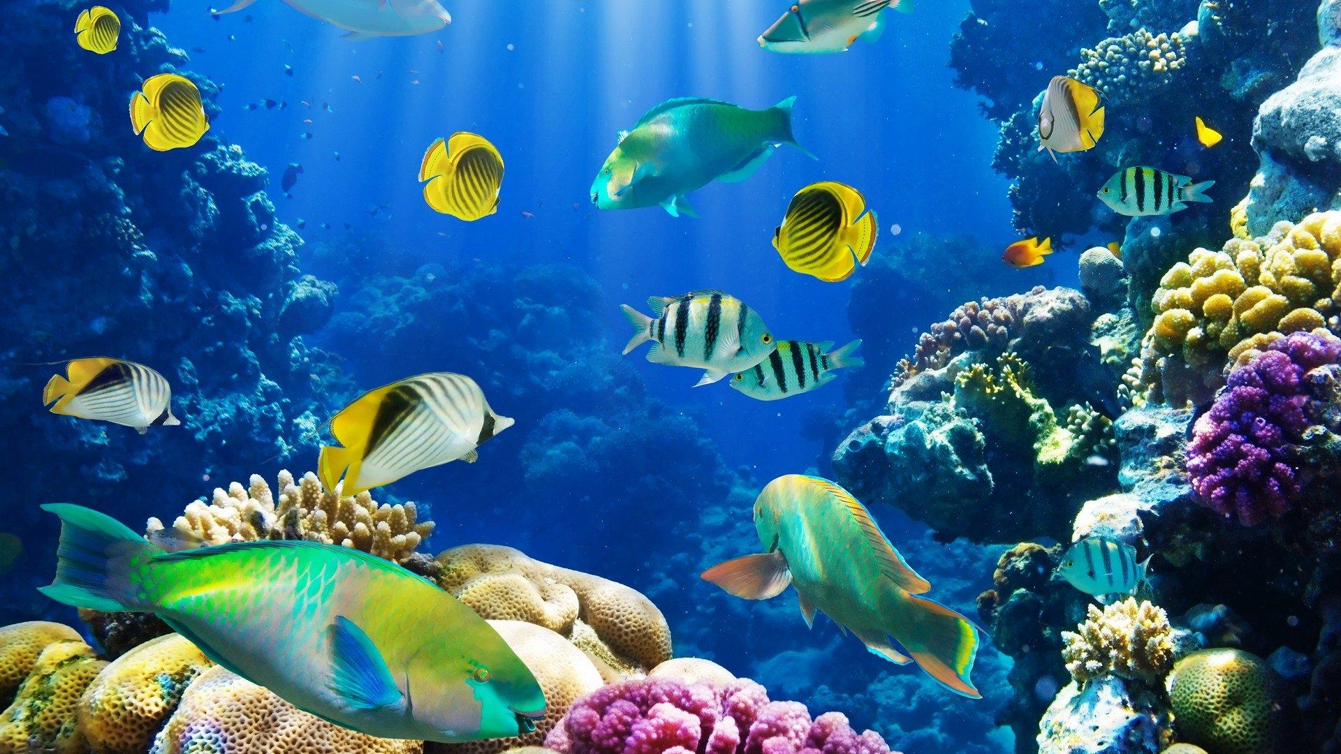Nature fish coral reef exotic wallpaper 1920x1080 260738 1920x1080