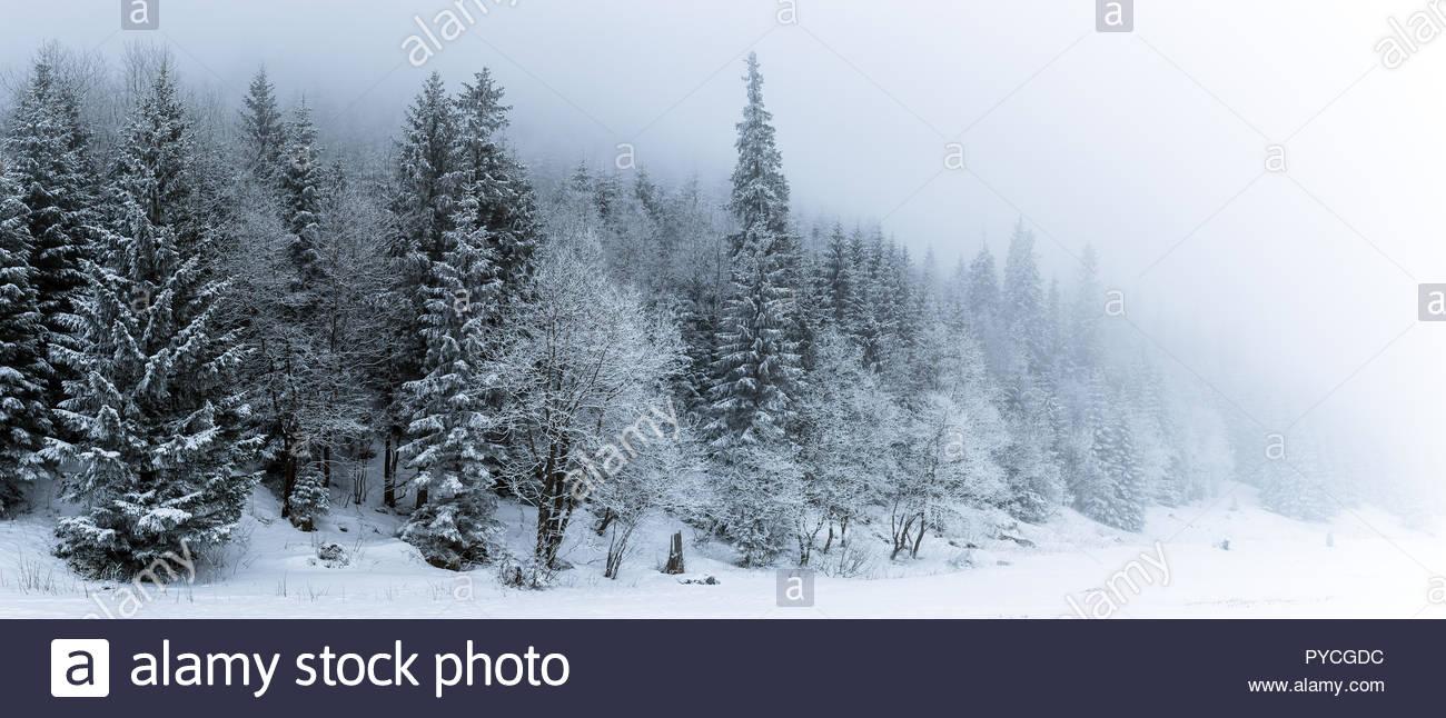 Panorama del bosque blanco de invierno con nieve en las Montaas 1300x646