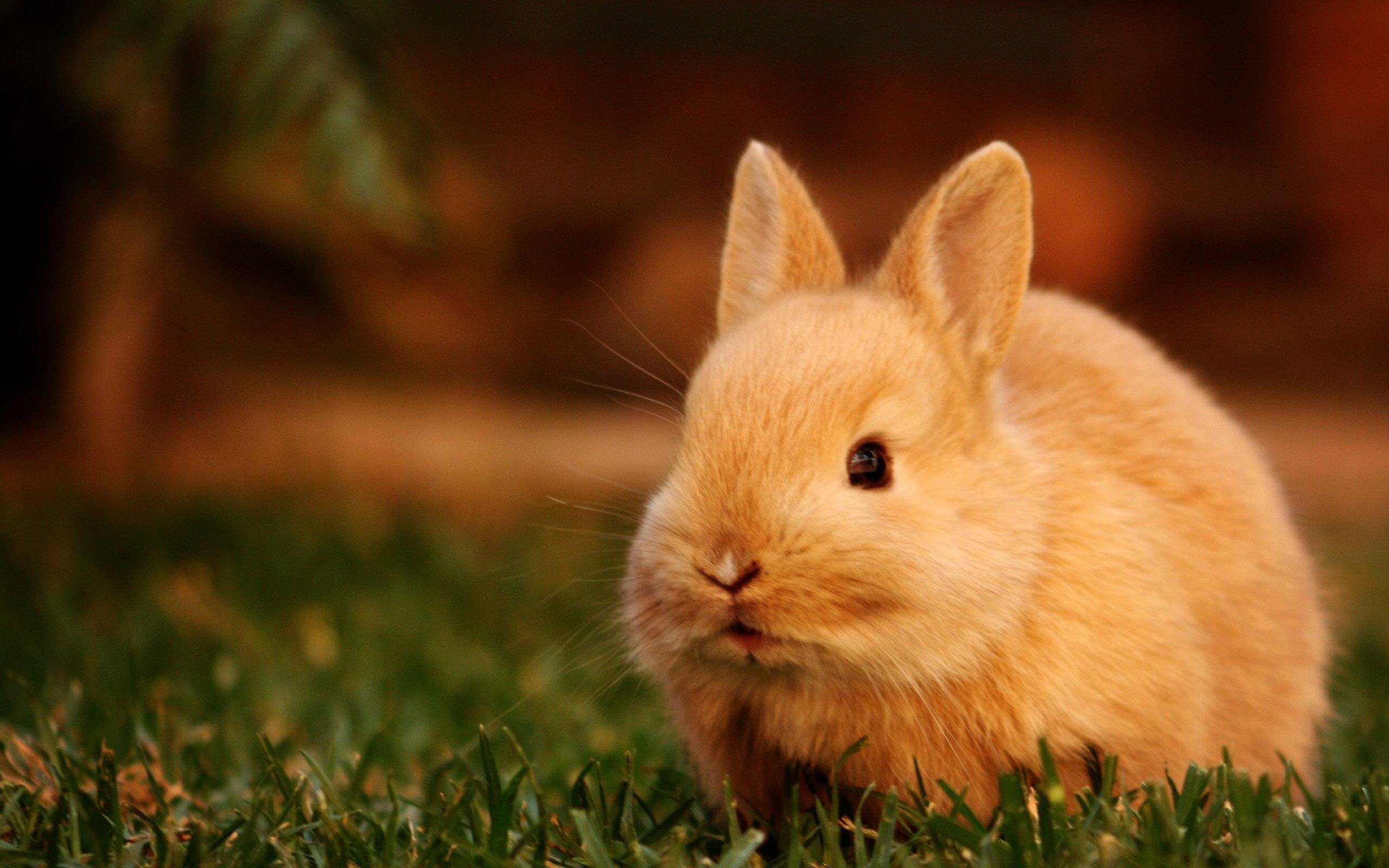 26] Wallpaper Of Rabbit on WallpaperSafari 2560x1600