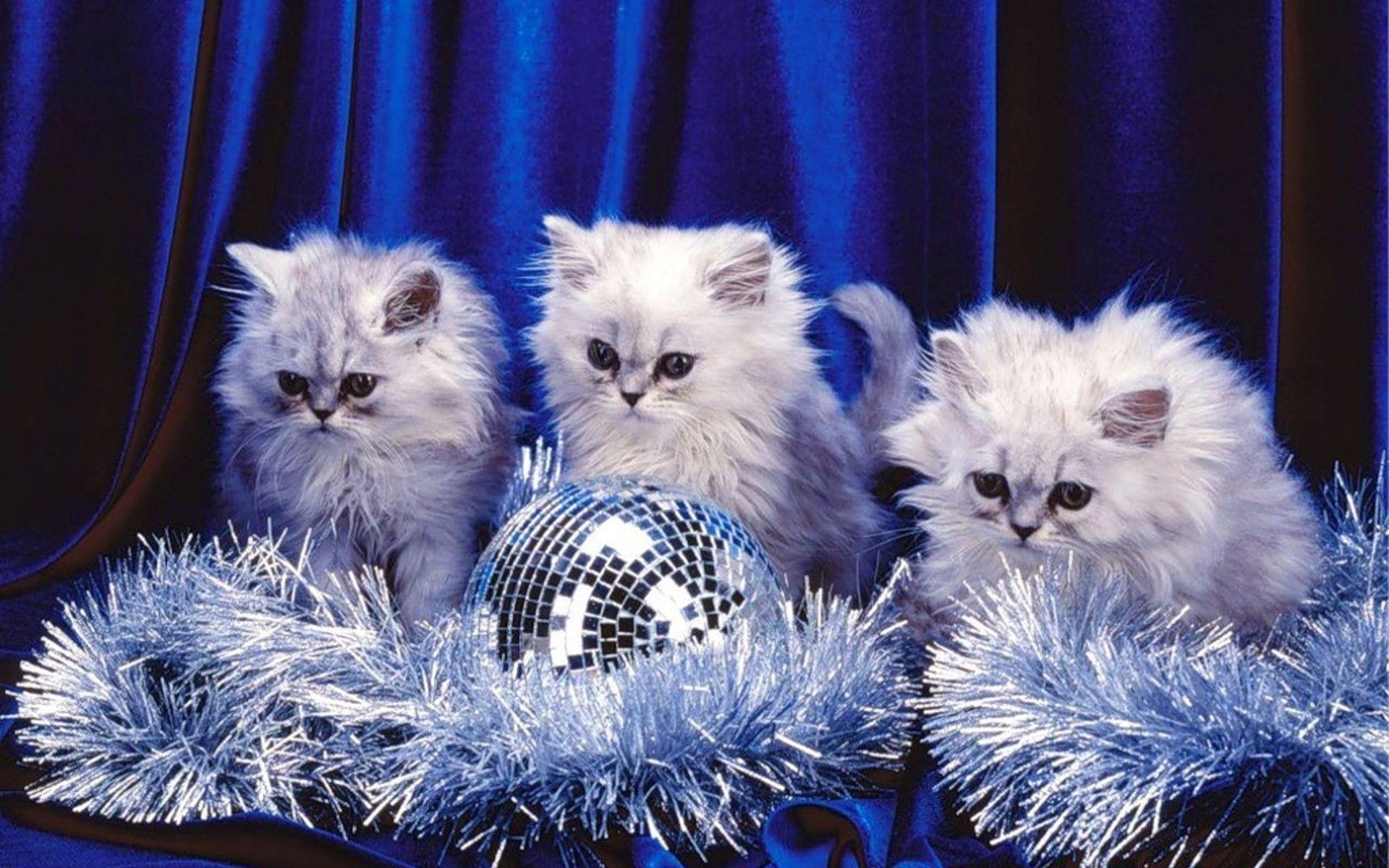 Kittens Wallpapers 1920x1200