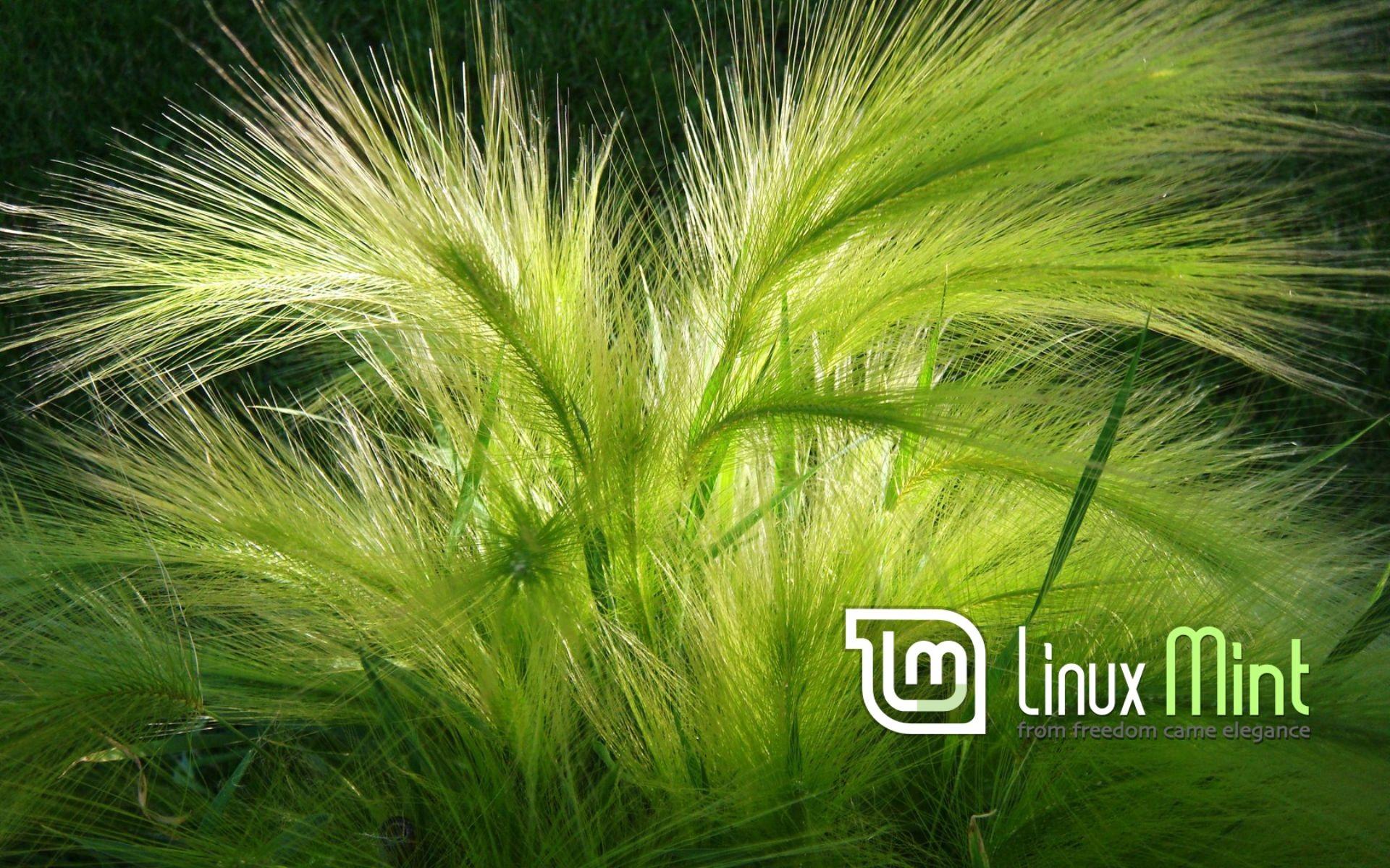 Linux Mint Hd And 809243 HD Desktop Backgrounds Wallpaper 1920x1200