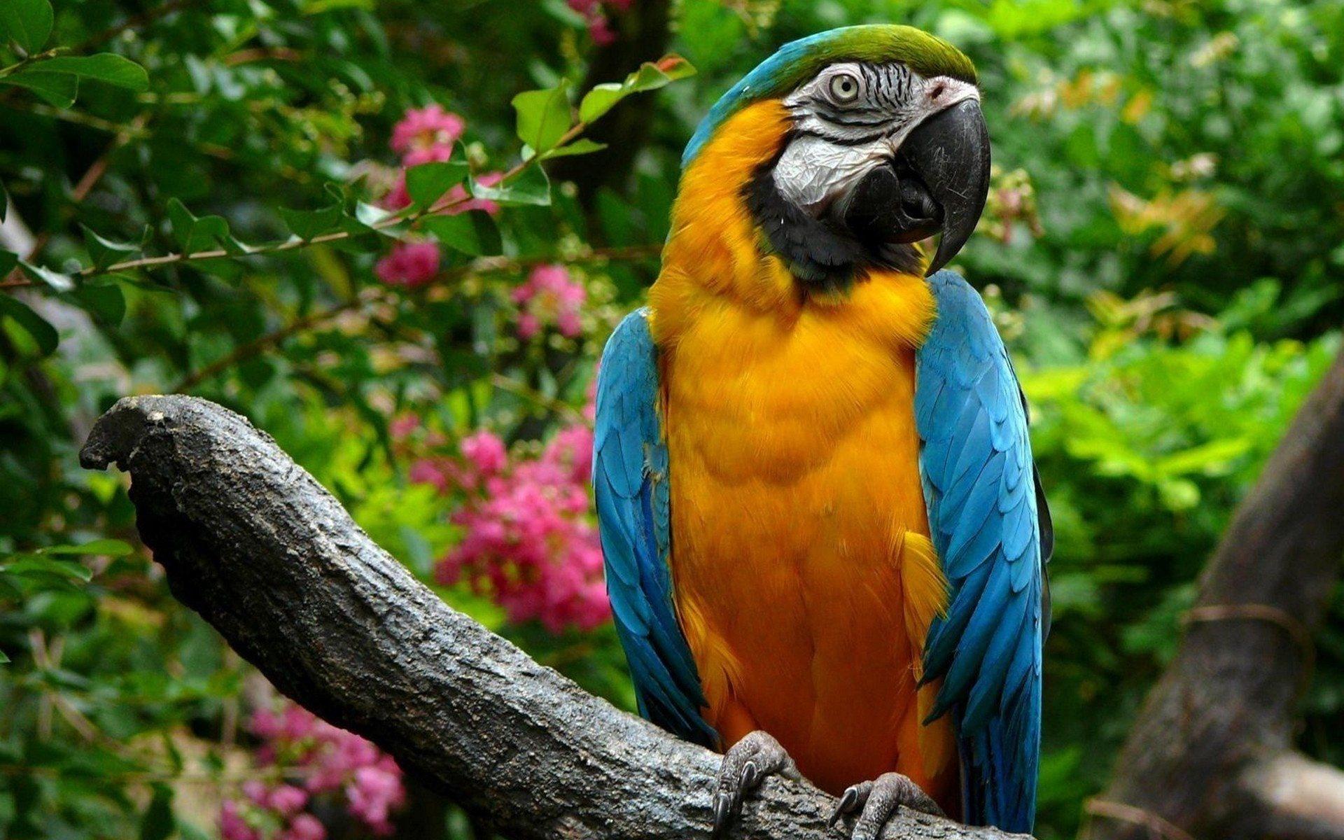 Large Parrots Wallpapers   1920x1200   678181 1920x1200