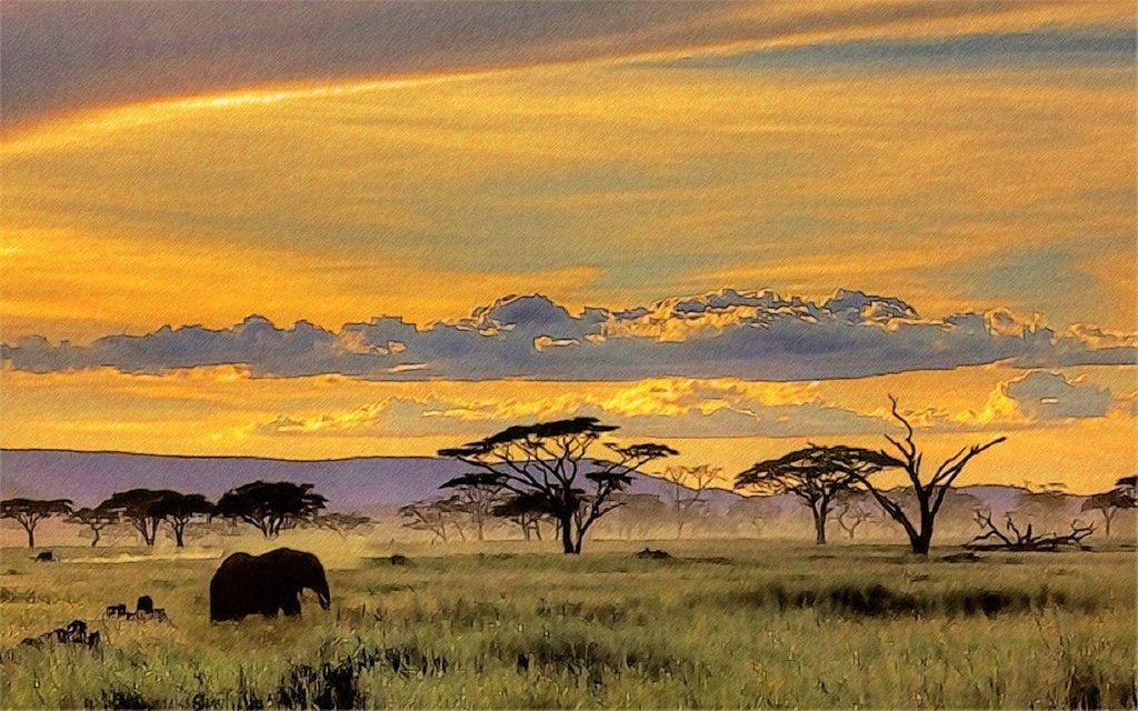 safari wallpaper wallpapersafari