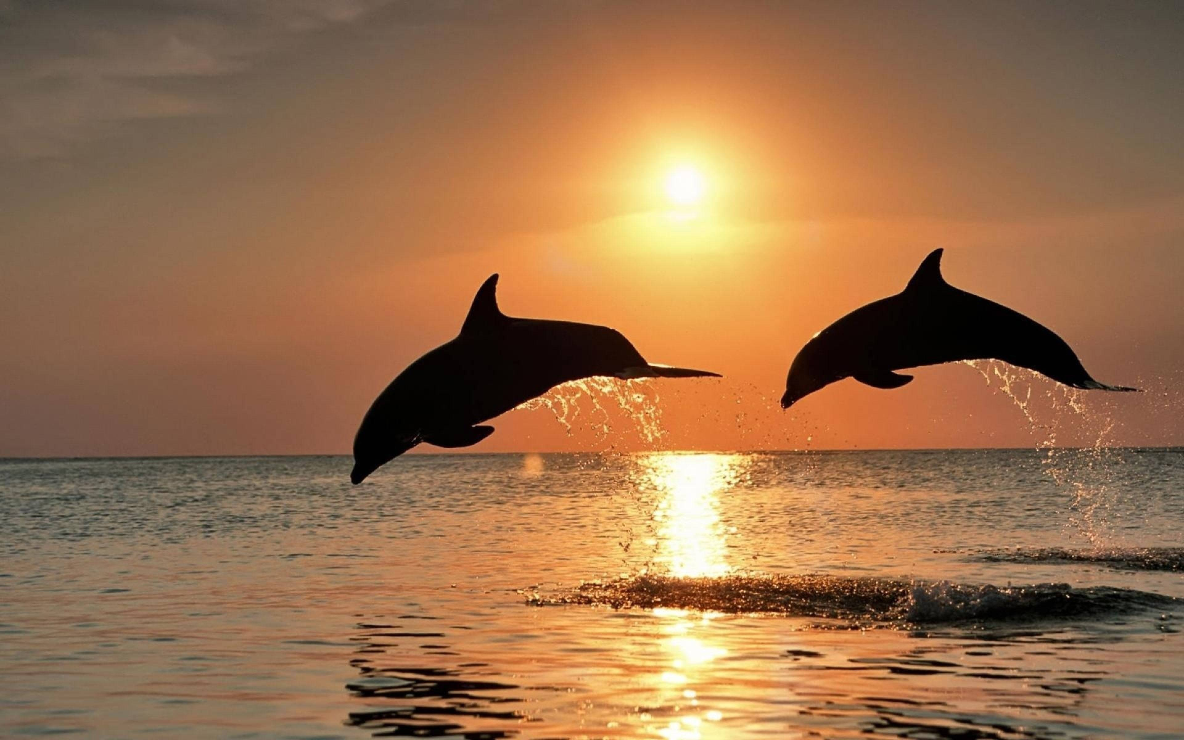Bottlenose dolphins Wallpapers Images Photos Pictures Backgrounds 3840x2400