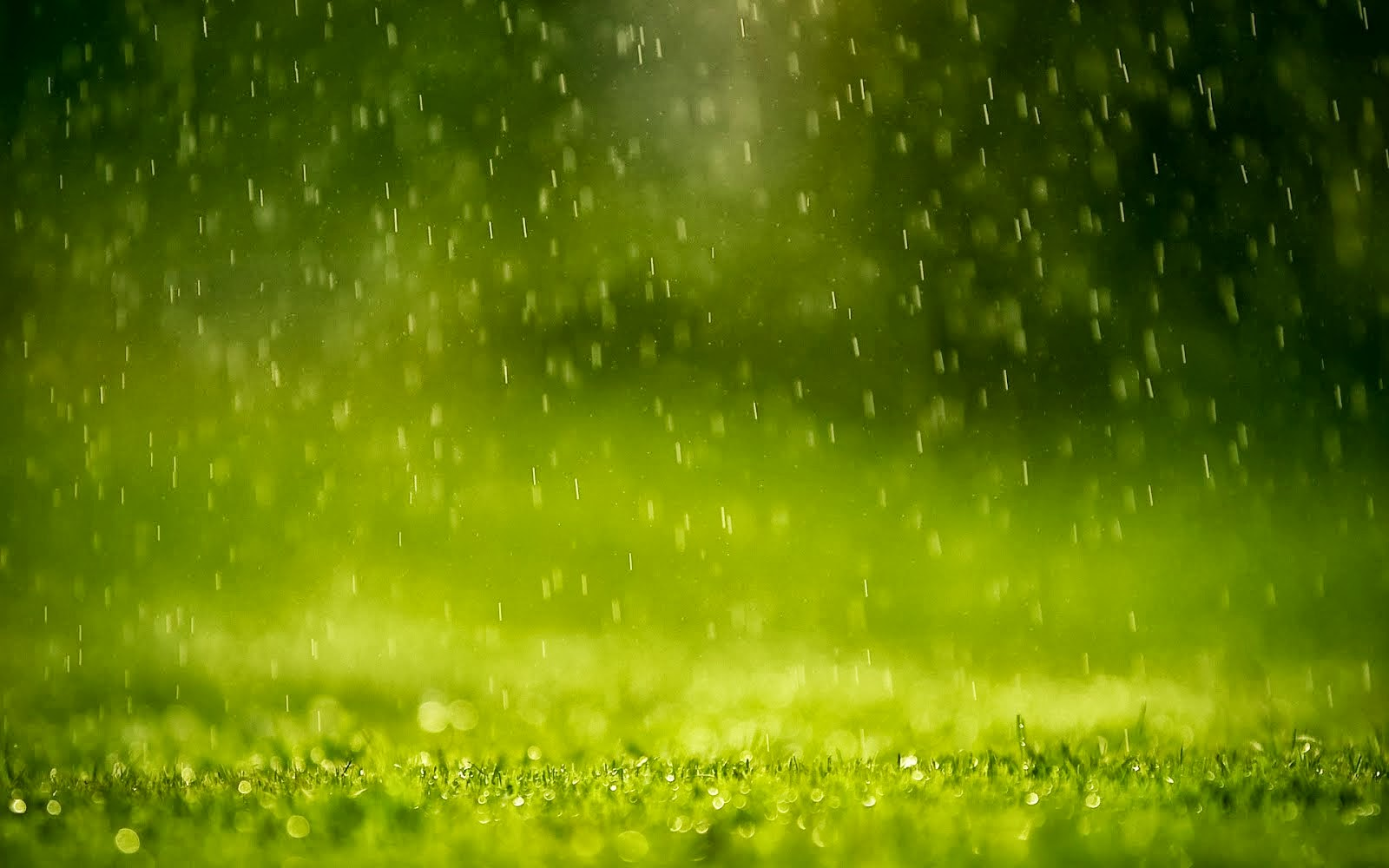 Rain Wallpaper in high resolution for High Definition Backgrounds 1600x1000