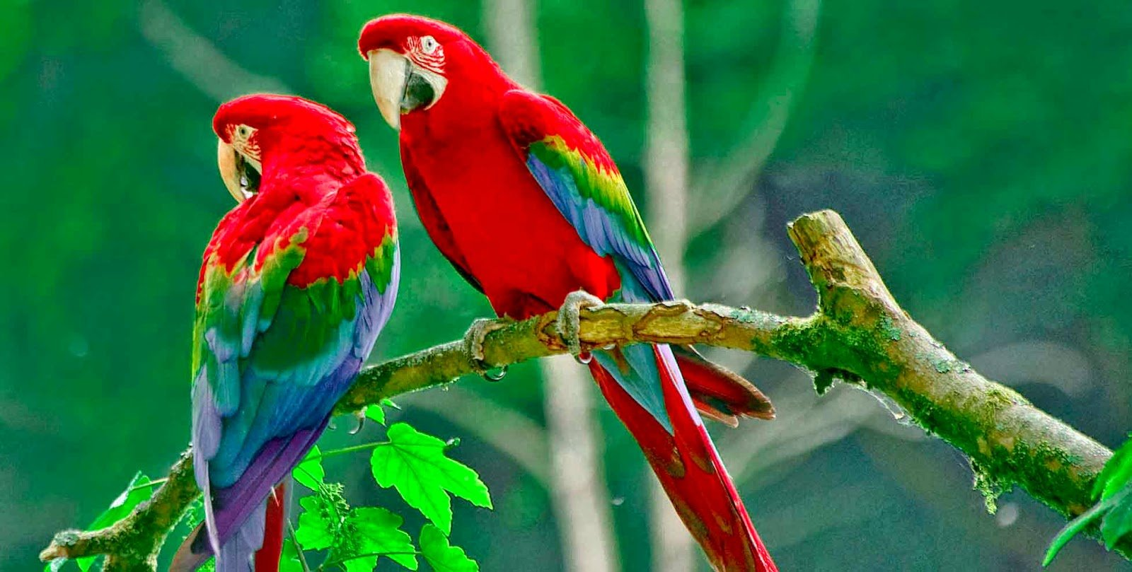 Bird of paradise wallpaper wallpapersafari - Hd birds images download ...