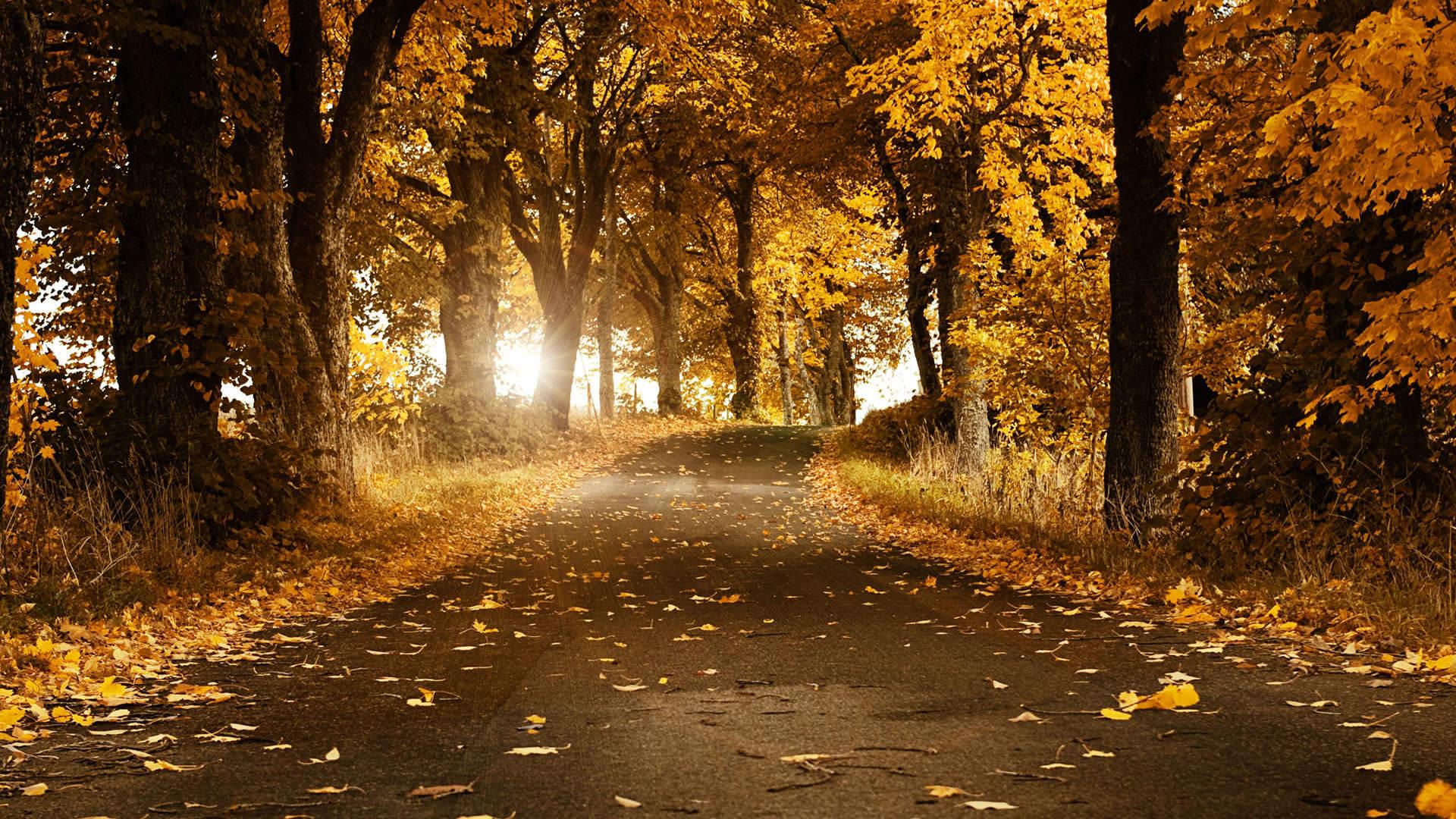 Beautiful Autumn Wallpaper 1920x1080 1920x1080