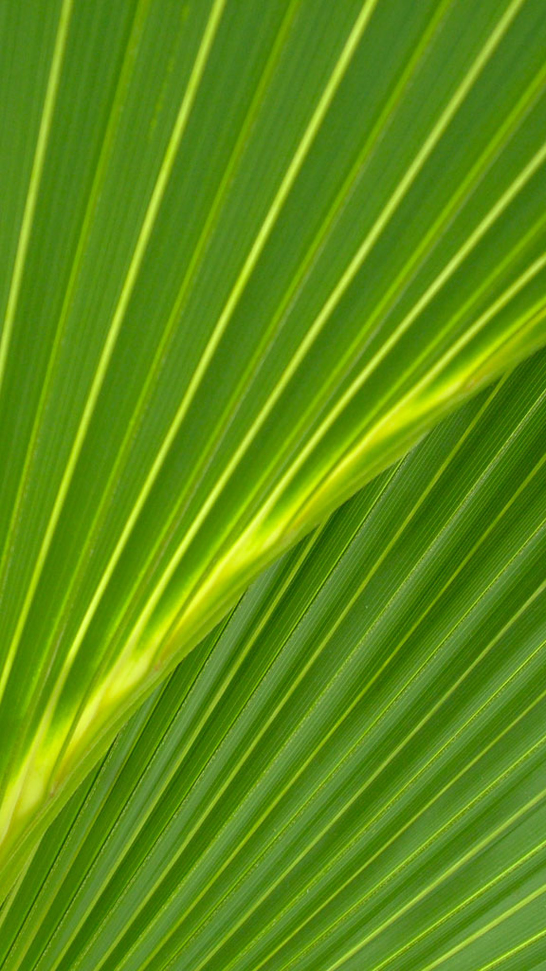 Related Pictures palm leaves wallpapersuggest com wallpapers 1080x1920