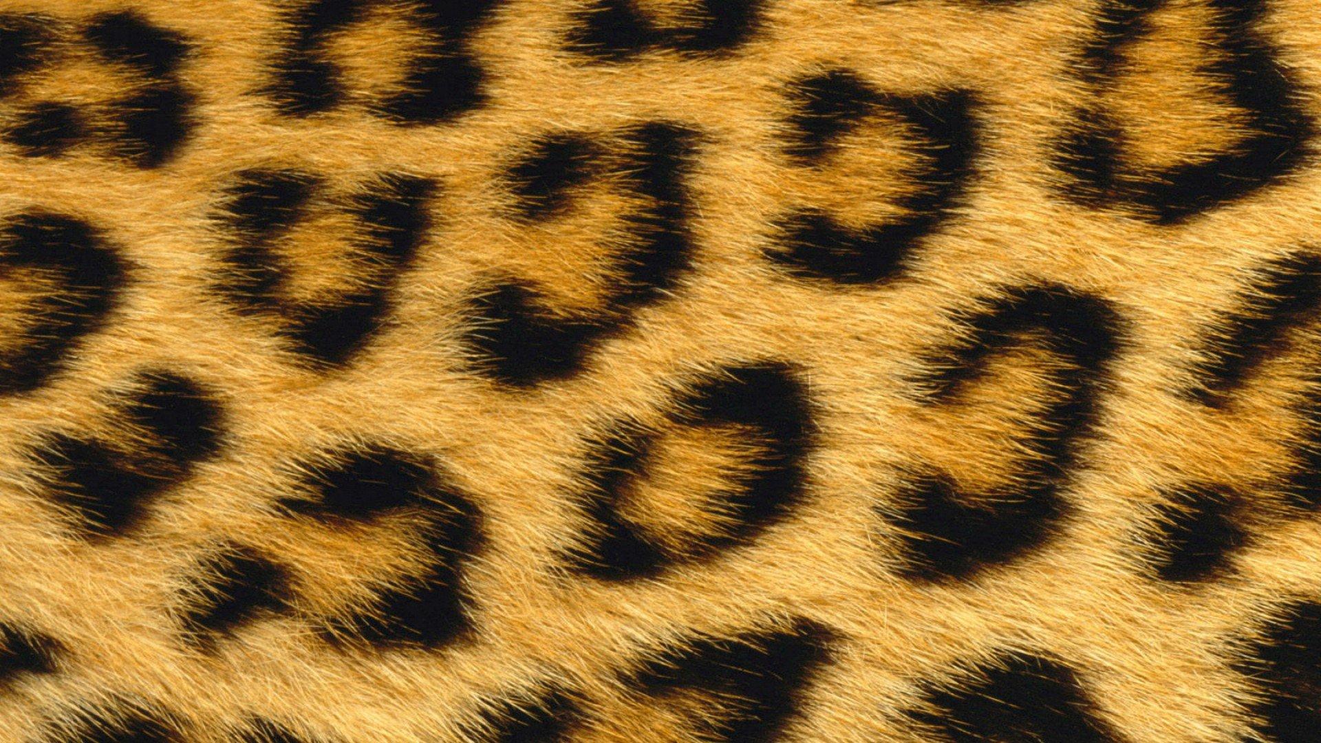 Leopard Print Wallpapers HD 1920x1080