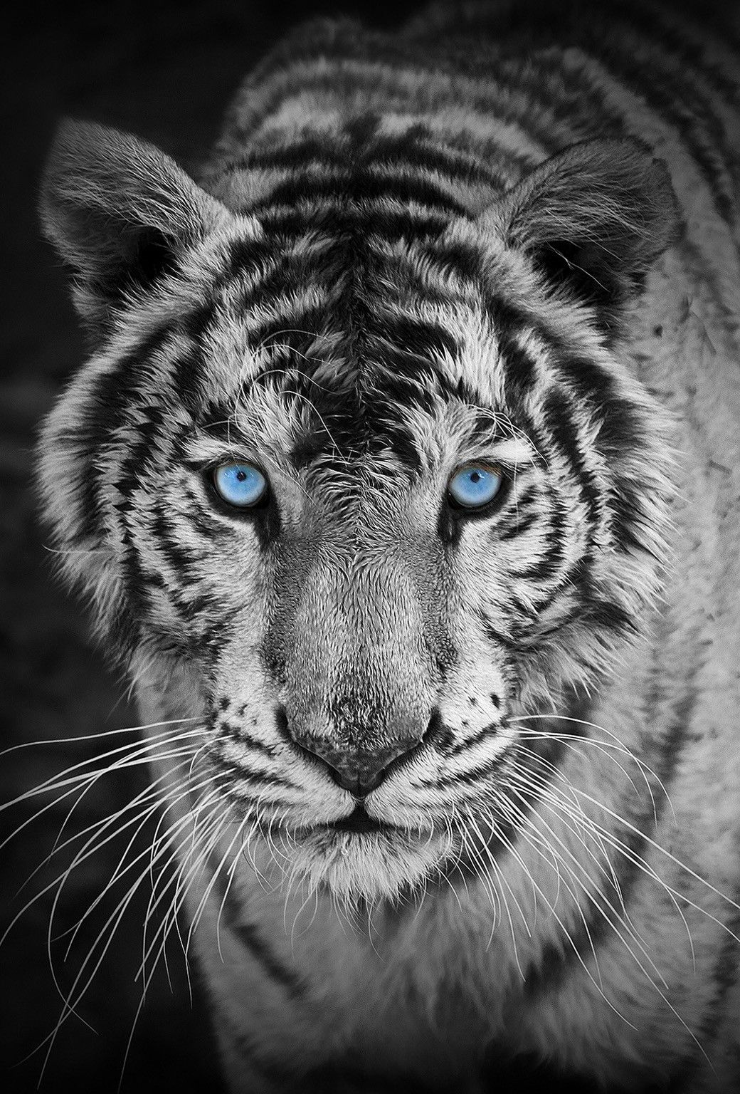 50 Wild Animal iPhone Wallpapers   Download at WallpaperBro 1040x1536
