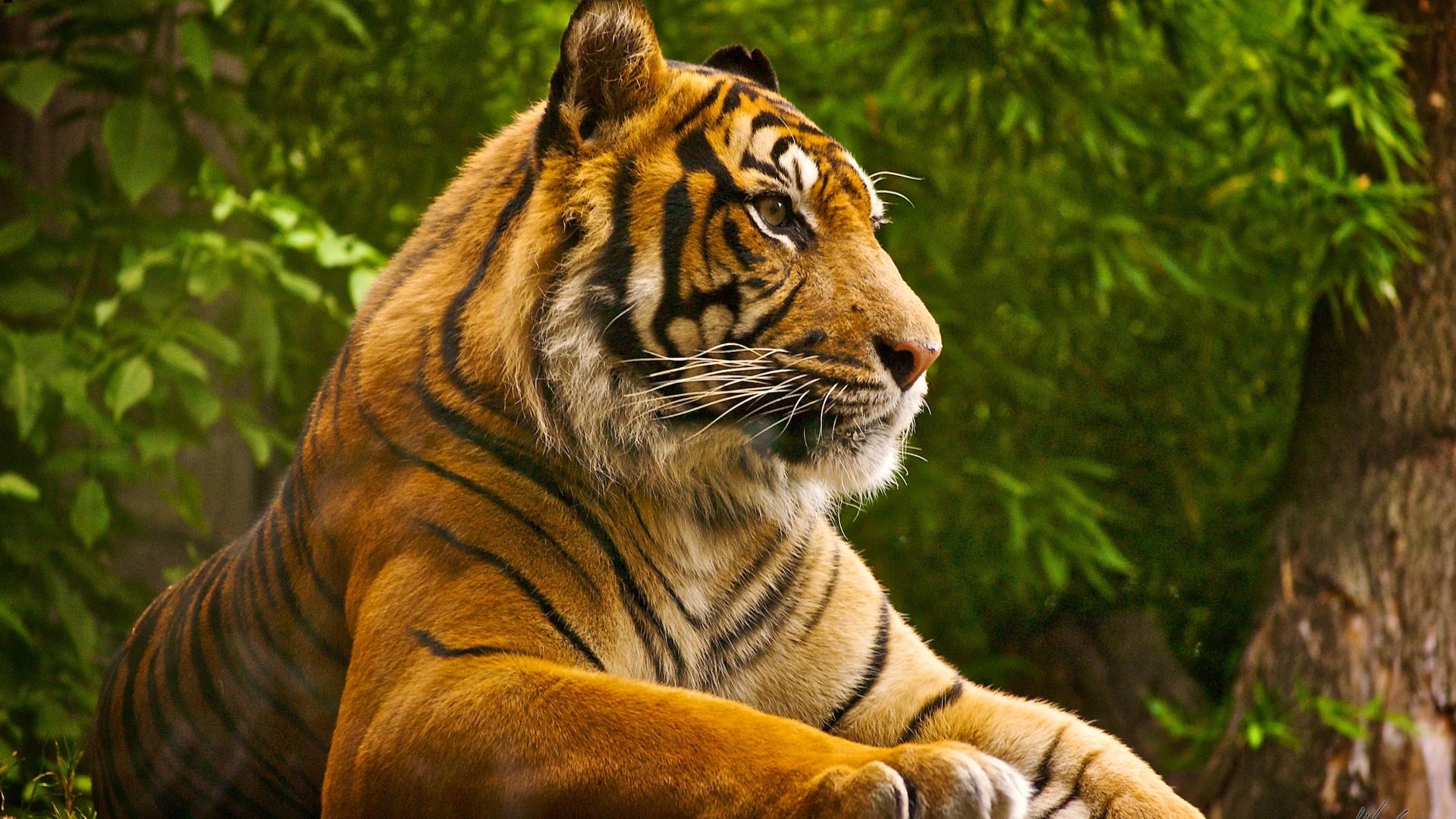 Clemson Tigers Desktop Wallpaper   wwwwallpapers in hdcom 1920x1080