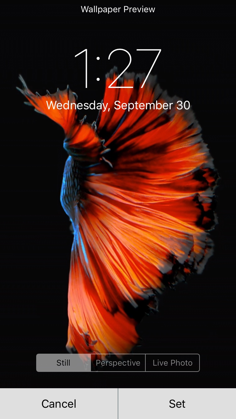 Wallpaper iphone moving - Sent From My 64gb Space Grey Iphone 6s