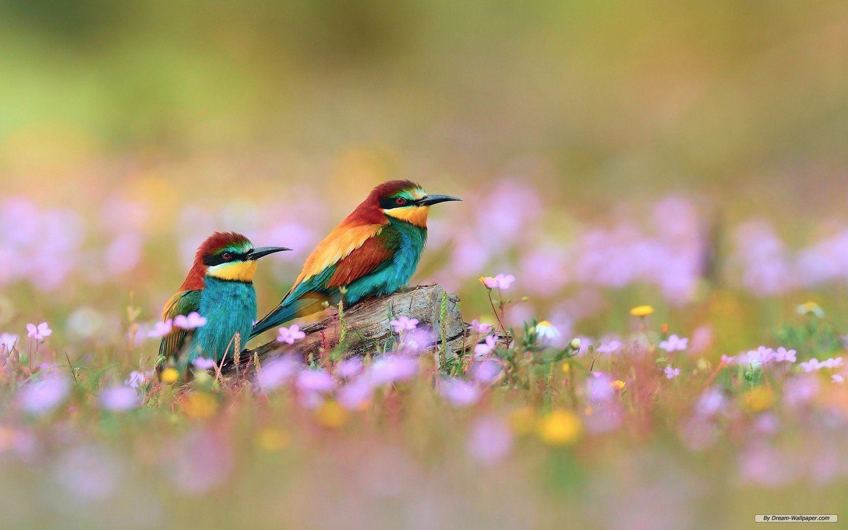 Spring Animal Wallpapers for Laptops 7677 HD Wallpapers Site 1680x1050