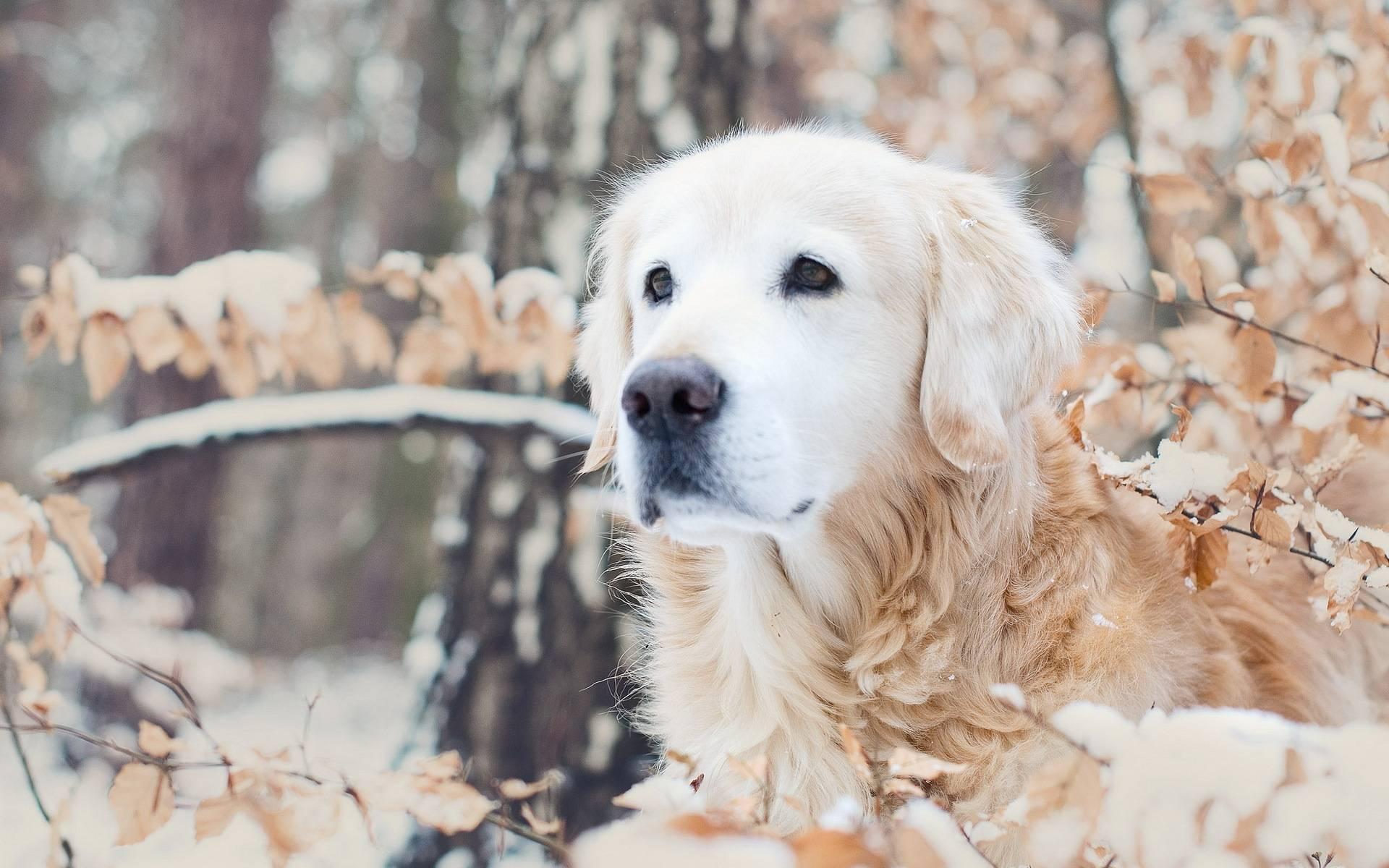 Winter   Dogs Wallpaper 1920x1200